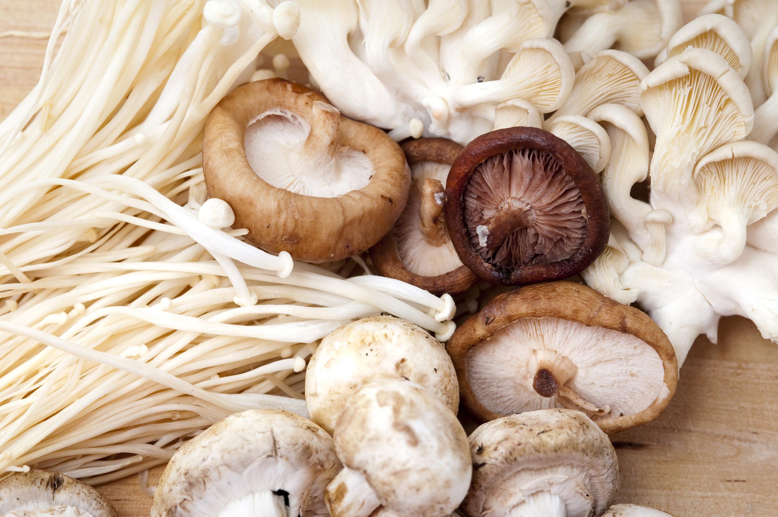 Fresh Mushrooms_Model4greenliving