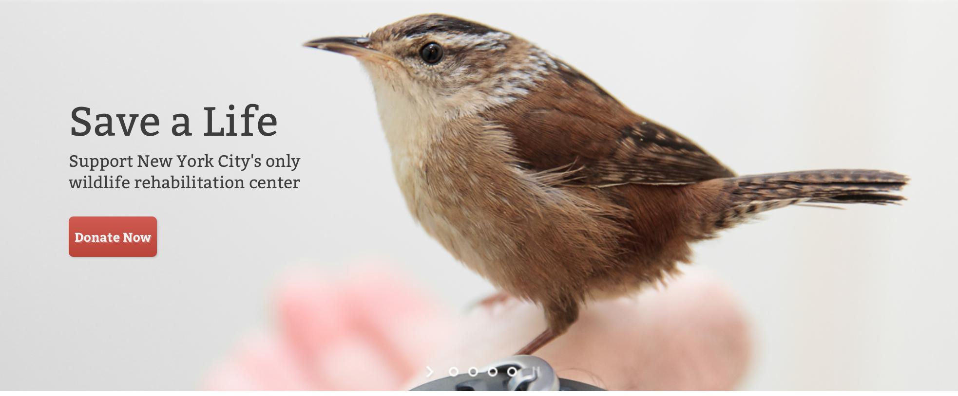 Wild Bird Fund_Support_Model4greenliving
