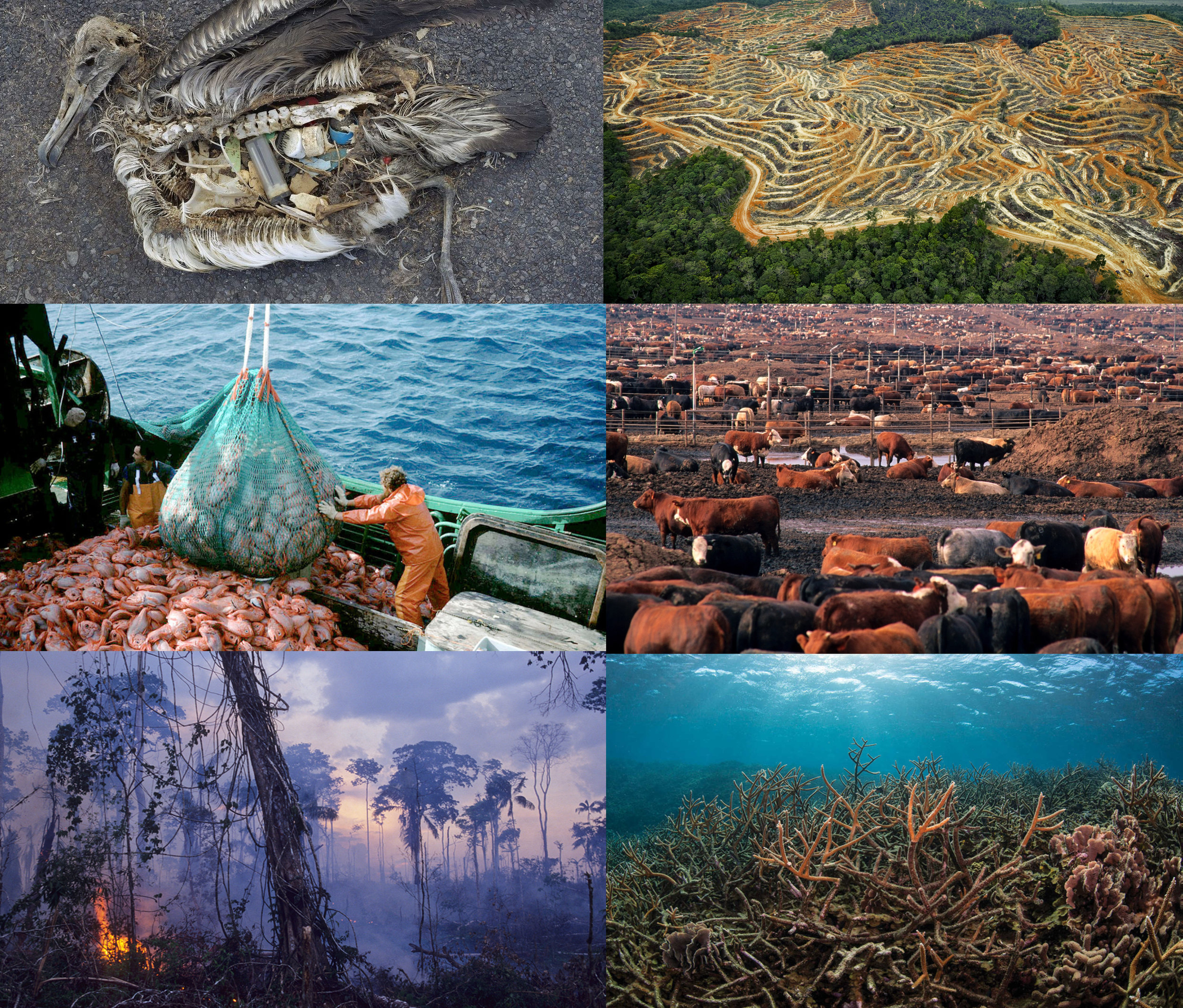 From Left to RIght : PLASTICS POLLUTION, PALM OIL FARMS CAUSING RAINFOREST DESTRUCTION, mass OVERFISHING leading to ocean SPECIES' EXTINCTION, METHANE POLLUTION FROM INDUSTRIAL CATTLE PRODUCTION, THE CLEAR CUTTING OF FORESTS, AND CORAL BLEACHING DUE TO WARMING SEAS.
