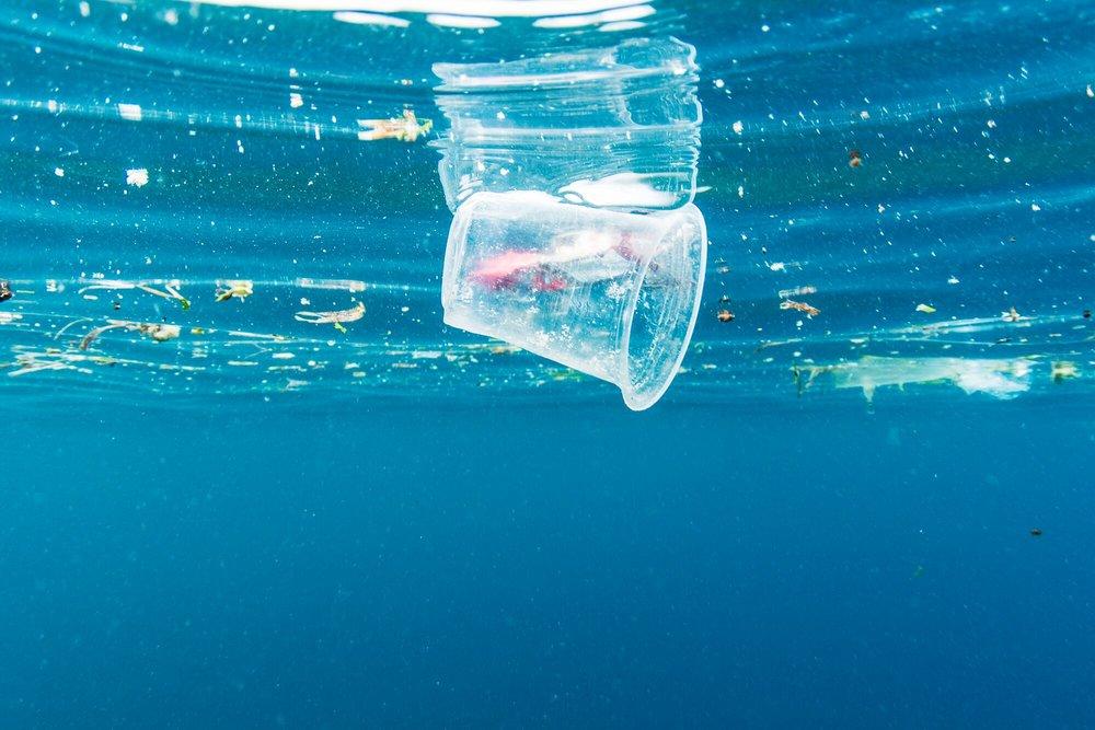 plastic cup in water.jpg