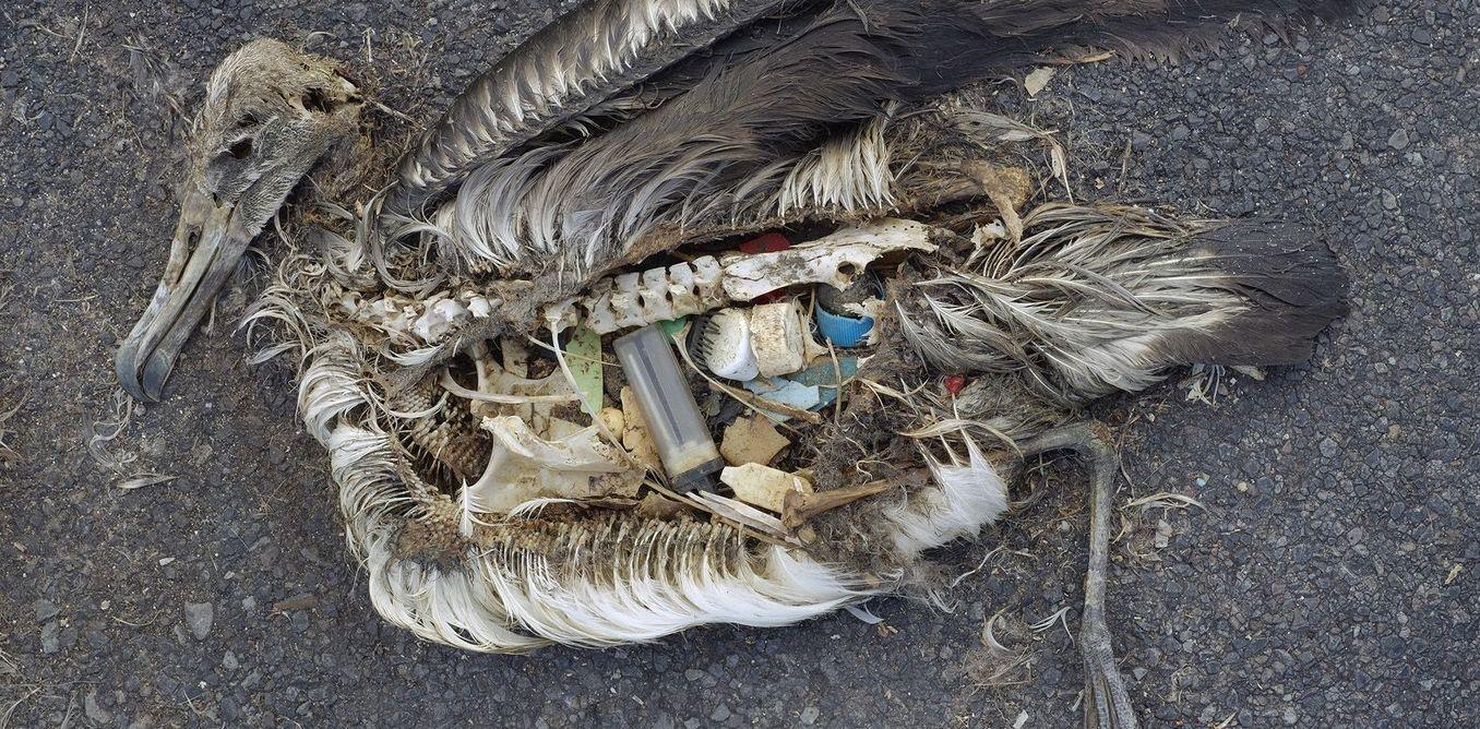 Pelican Full of Trash.jpg