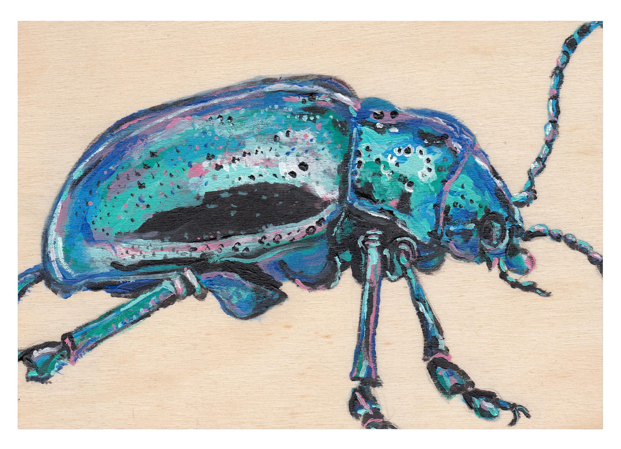 beetle-4.jpg
