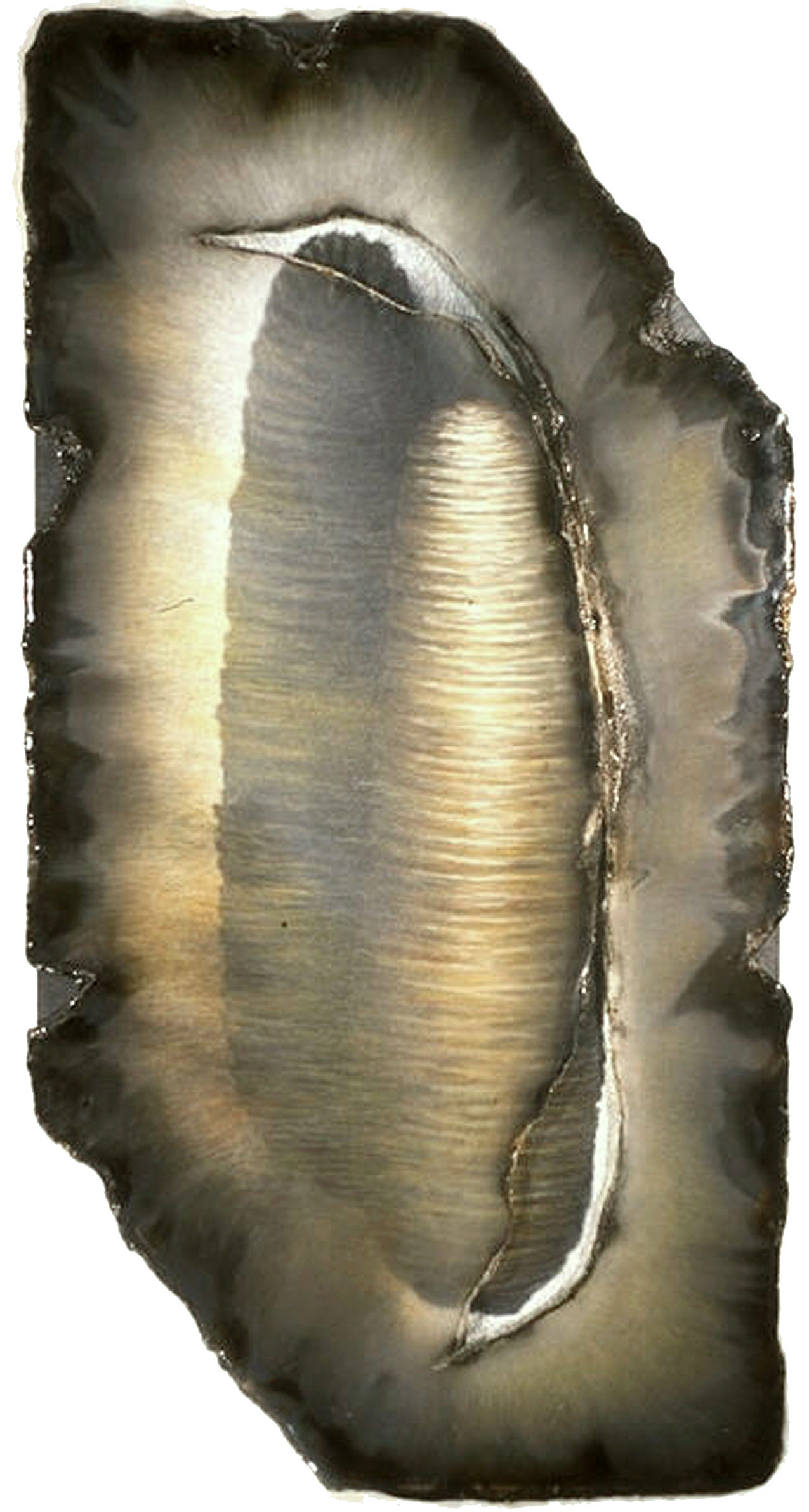 Breaking Dormancy,  2000  Graphite, kozo paper, pig gut, acrylic and prismacolor on plexi 48 x 28 x 1 inches