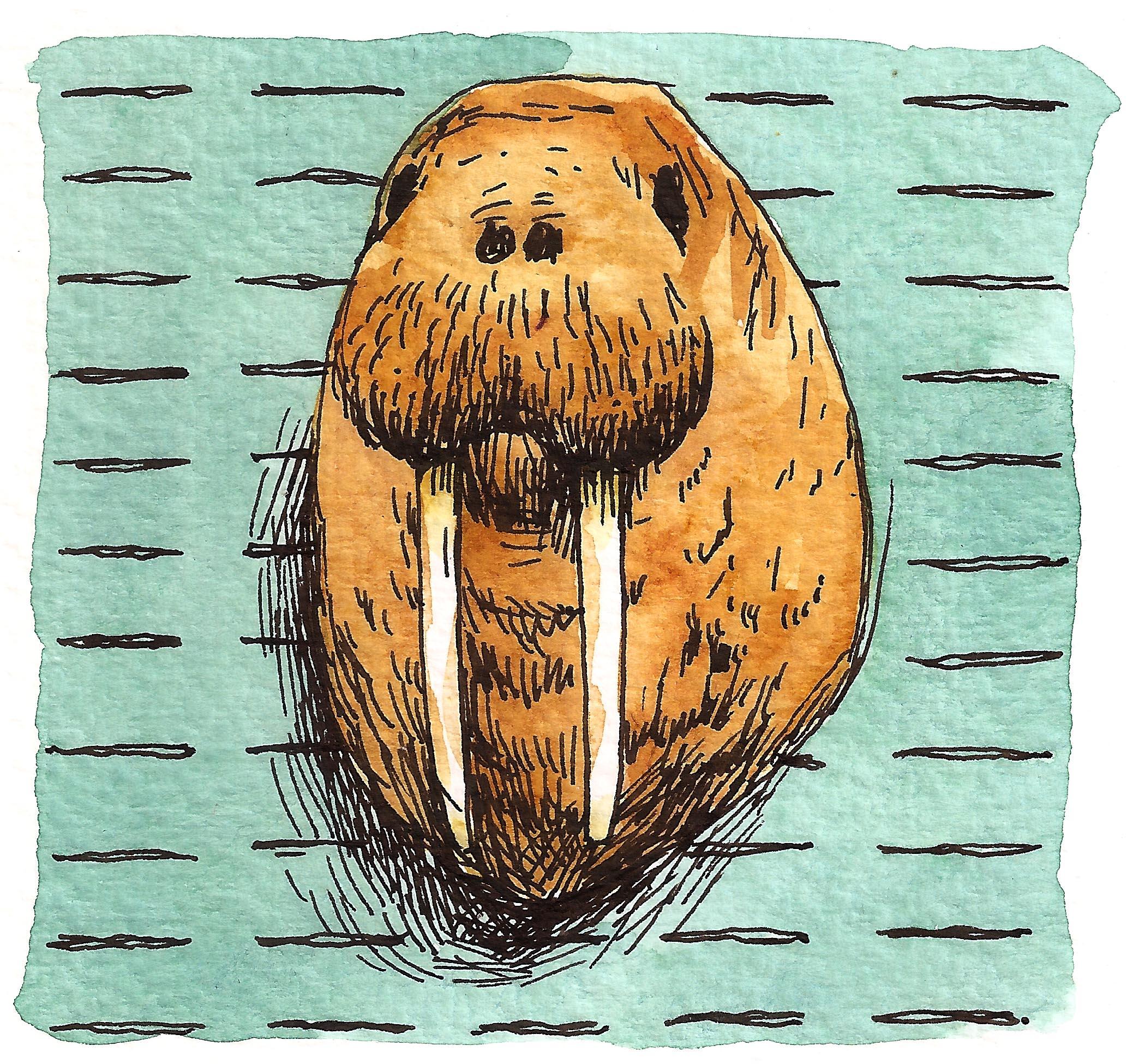 'Walrus'