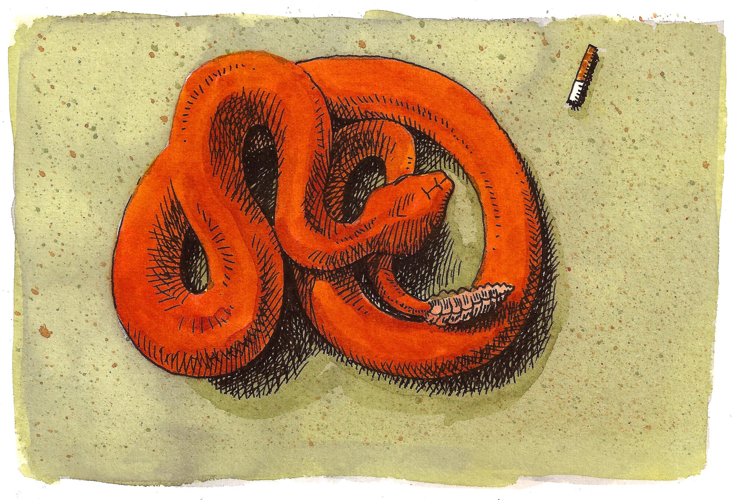 'Rattlesnake'