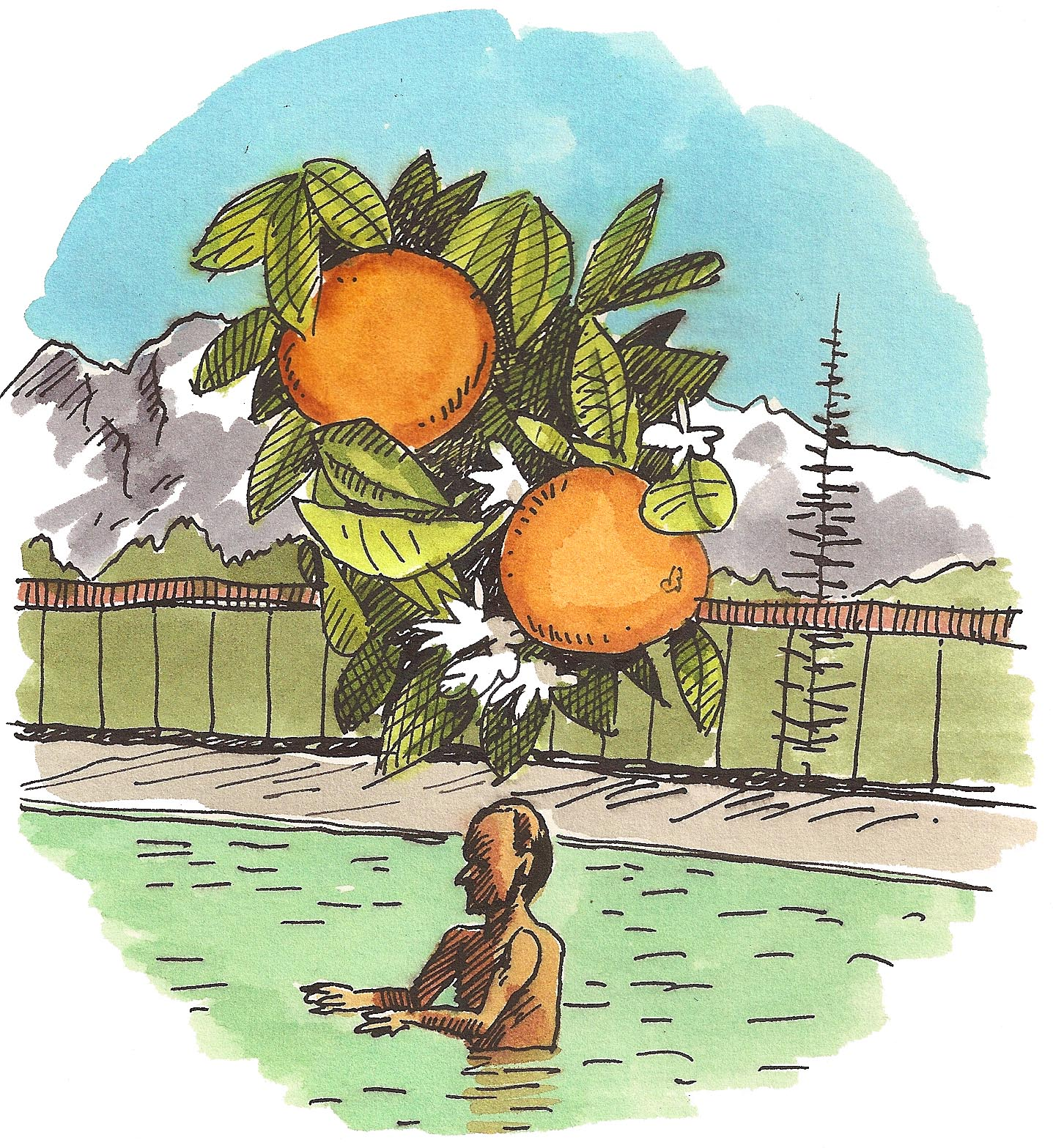 'Citrus Dreams'