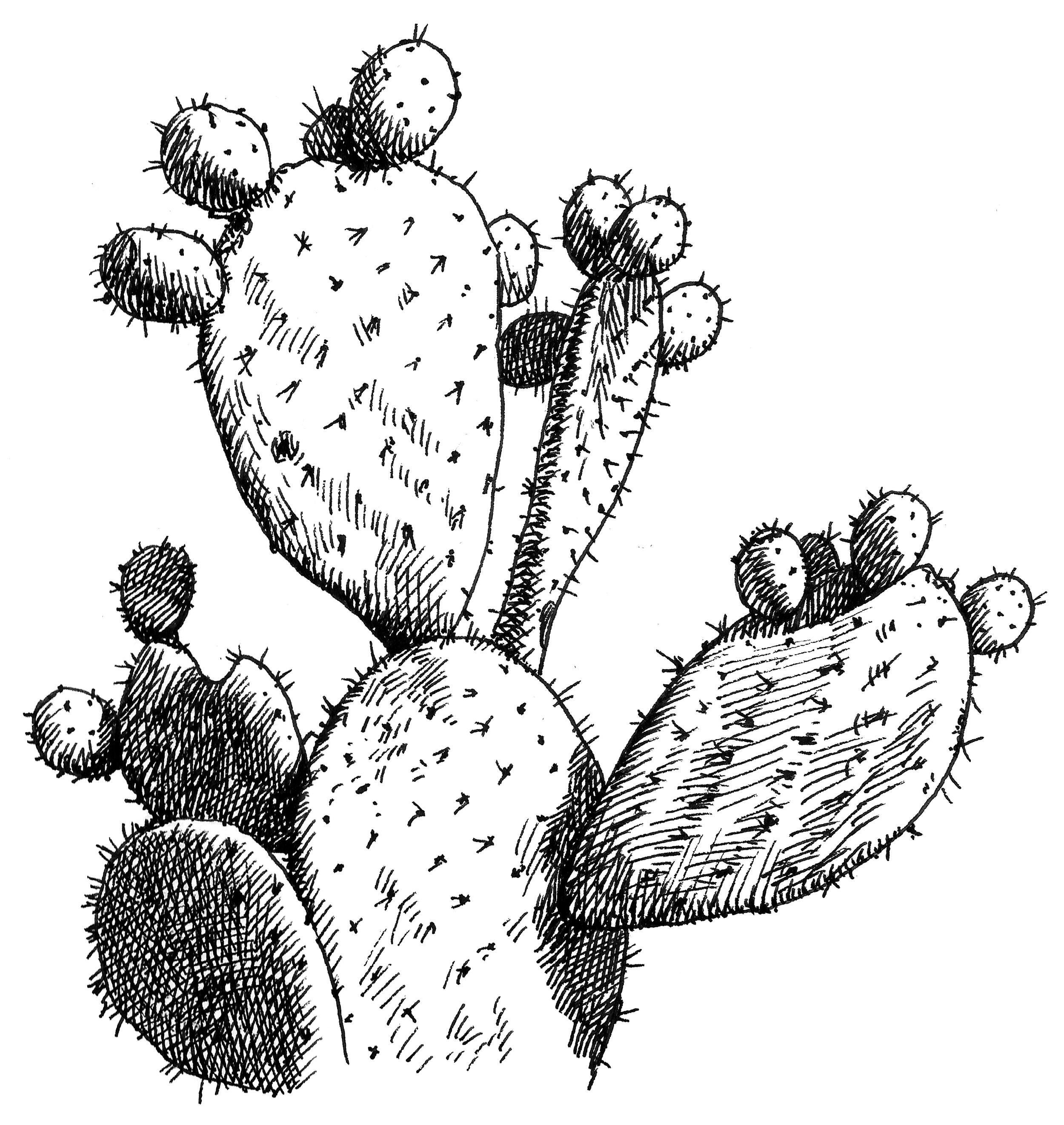 'The Last Cactus'