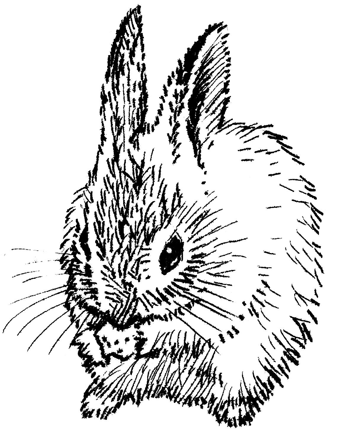 '4oz Rabbit'
