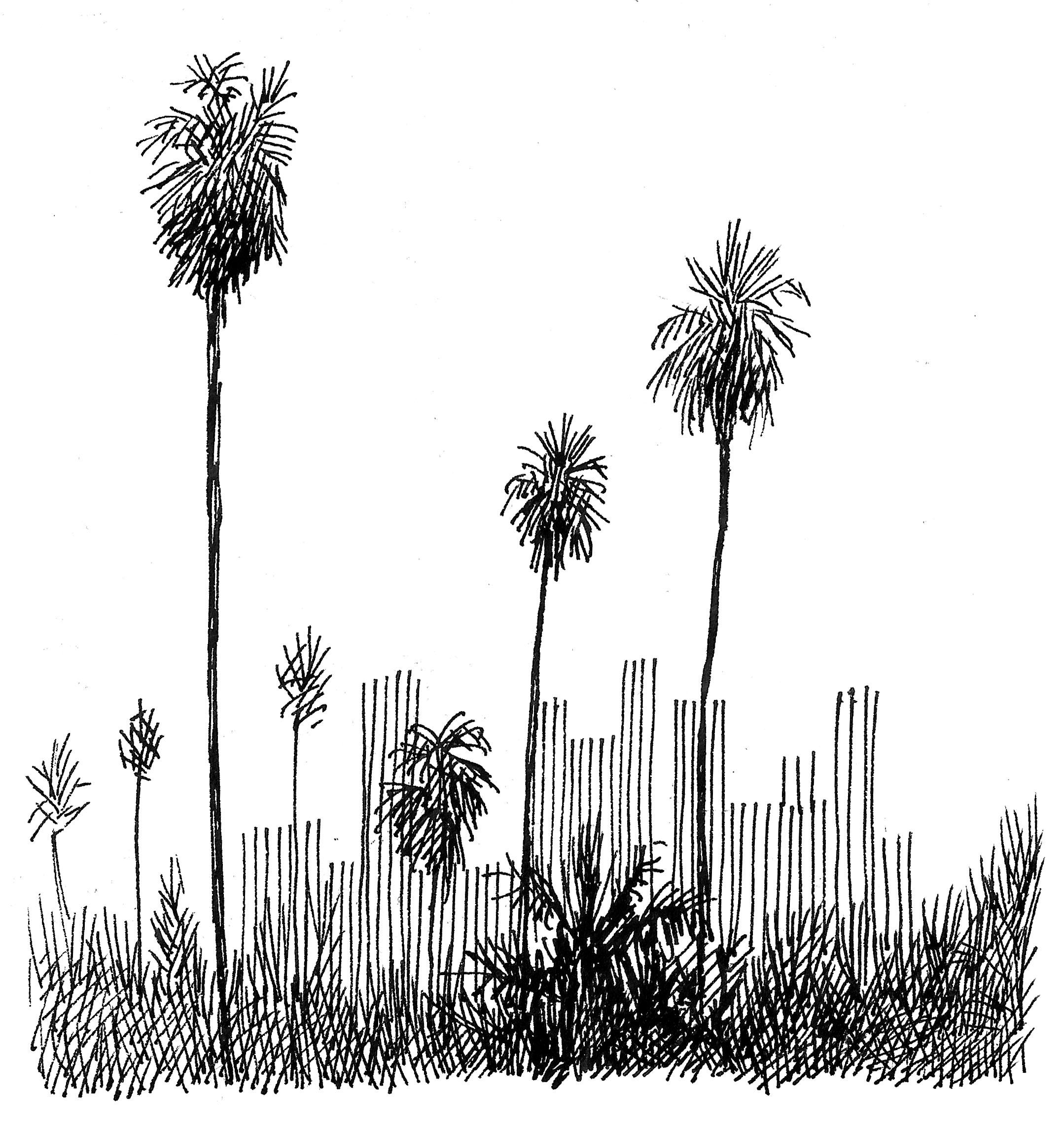 'Overgrown 1'