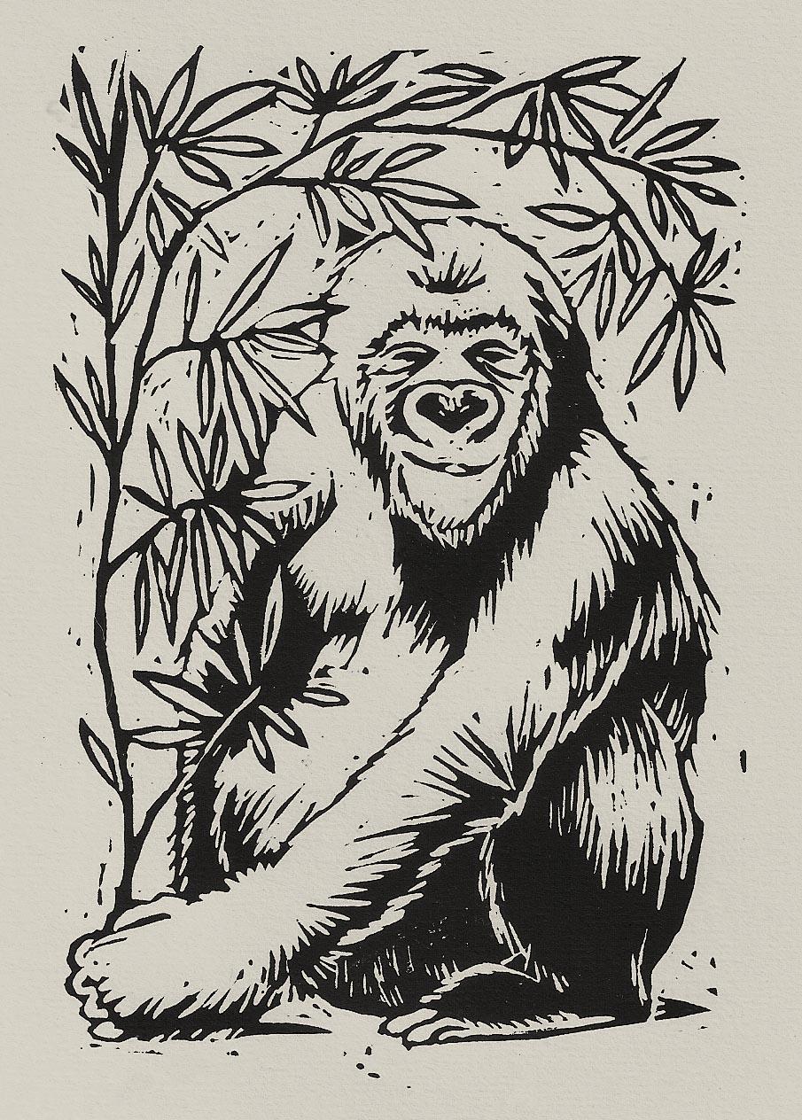 'White Gorilla'