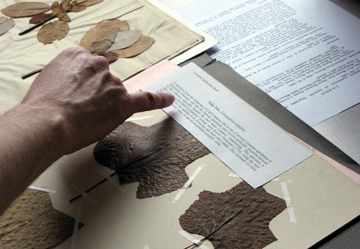 HerbariumSamplesHand.jpg