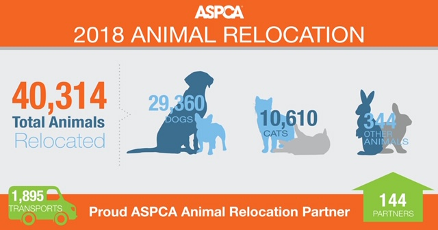 DAWG is proud to be partners with the ASPCA Animal Relocation team who transported over 40,000 animals in 2018! Collaborating with other animal welfare organizations enables us to help change the lives of thousands of homeless animals each year.  We are continuing our partnership in 2019 and together we will save even more animals. Your support of DAWG and the ASPCA is greatly appreciated!!
