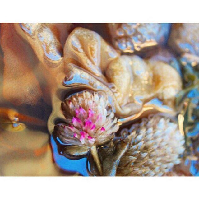 #redclover #plantpalette genius by #naturalcolor #artist #alchemist @sashaduerr