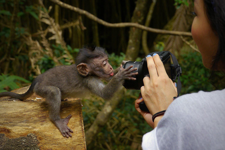 monkey-pic.jpg