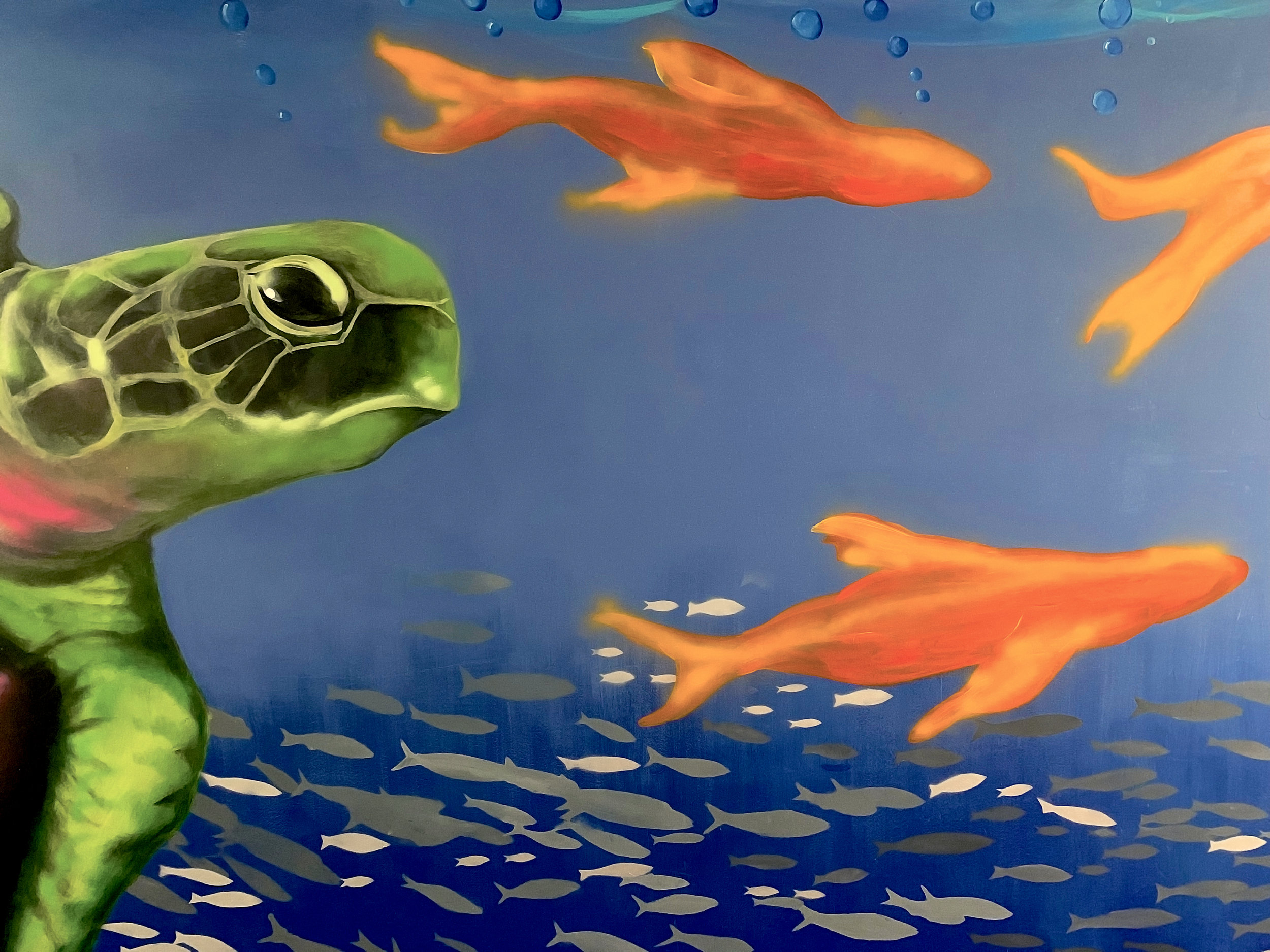 turtle fish.jpg