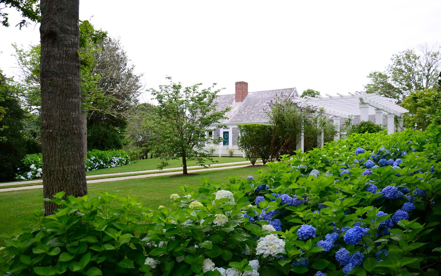Located in Chatham, MA, this Cape Cod cottage has Endless Summer Hydrangea and a perennial garden that borders the pea stone driveway.