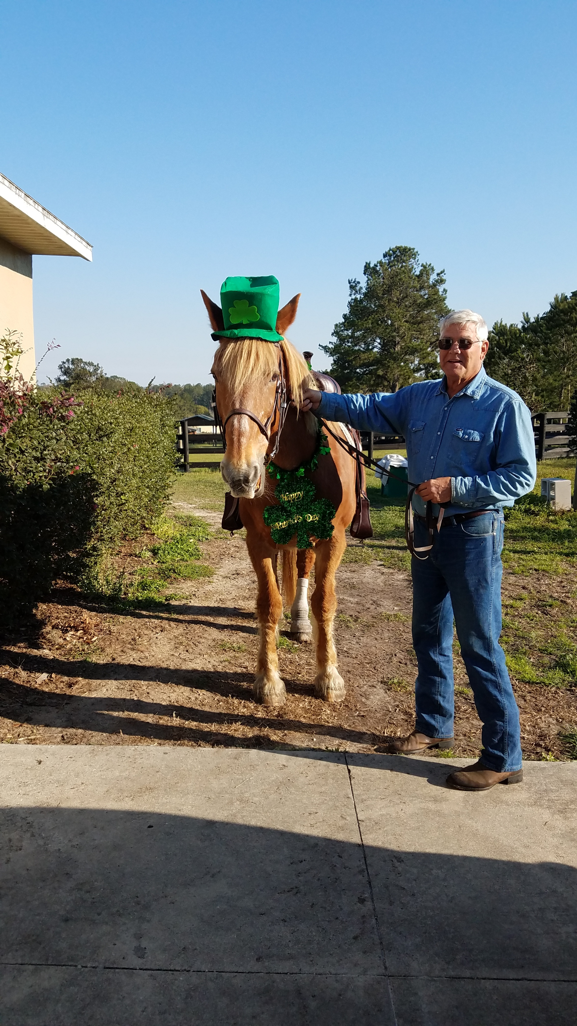 Retired Air Force and Commercial Airline pilot, now dressage student, Phil with his sweet mare, a Belgian draft/ Quarter horse cross.