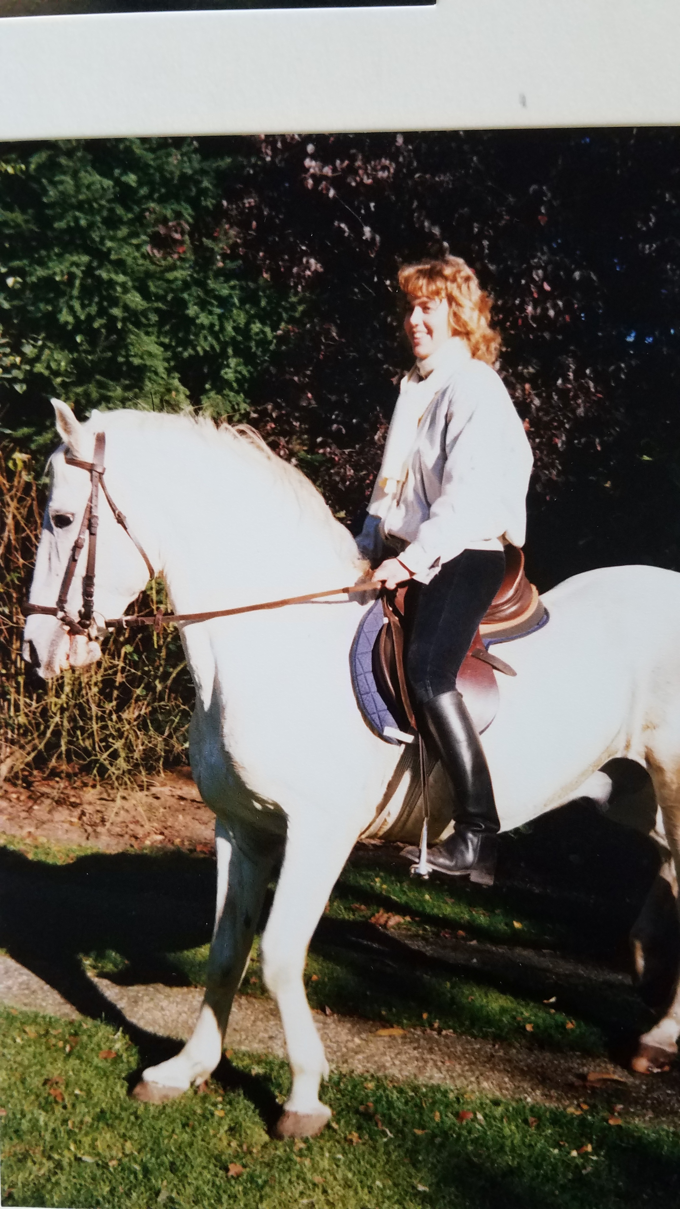 Lipizzaner breeding stallion Tullipan. I later trained and competed his son as well.