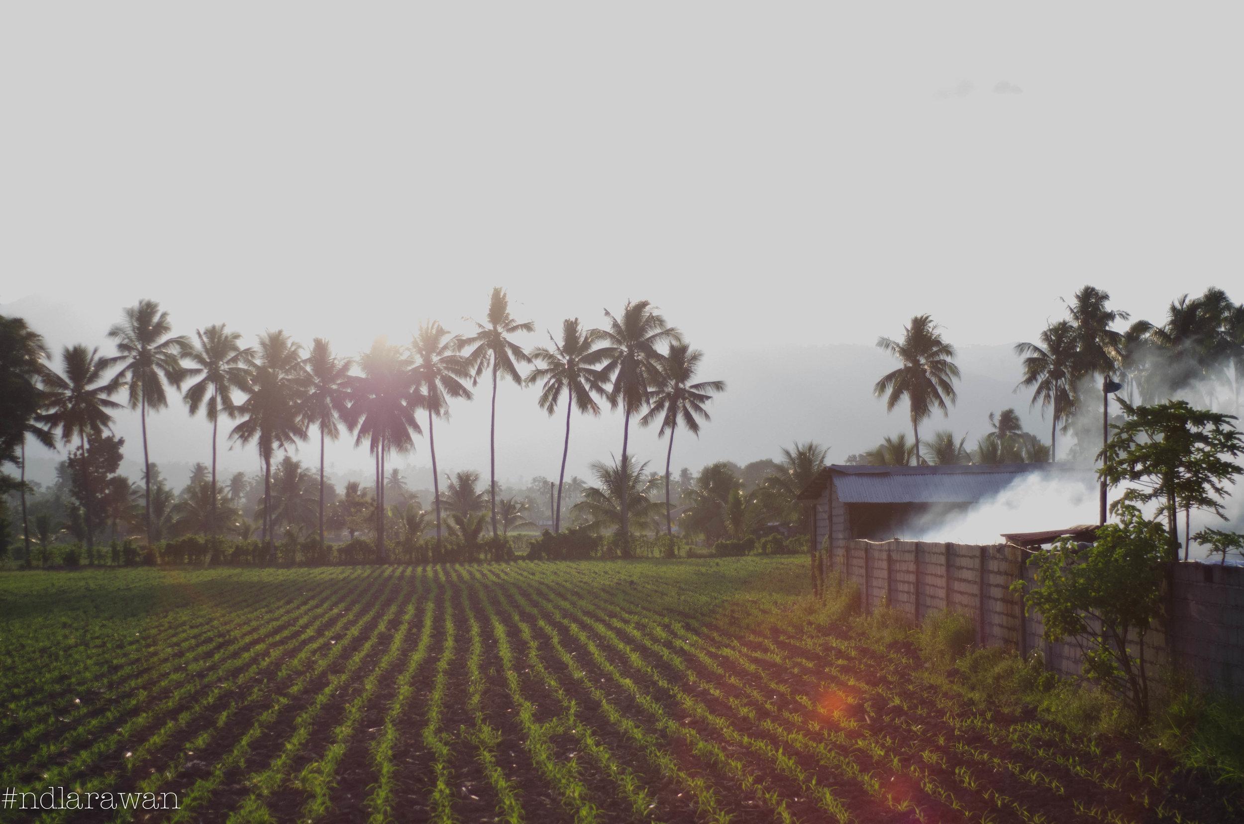 trees n field.jpg
