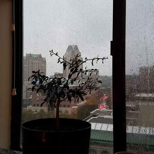 The finger lime tree watches the rain