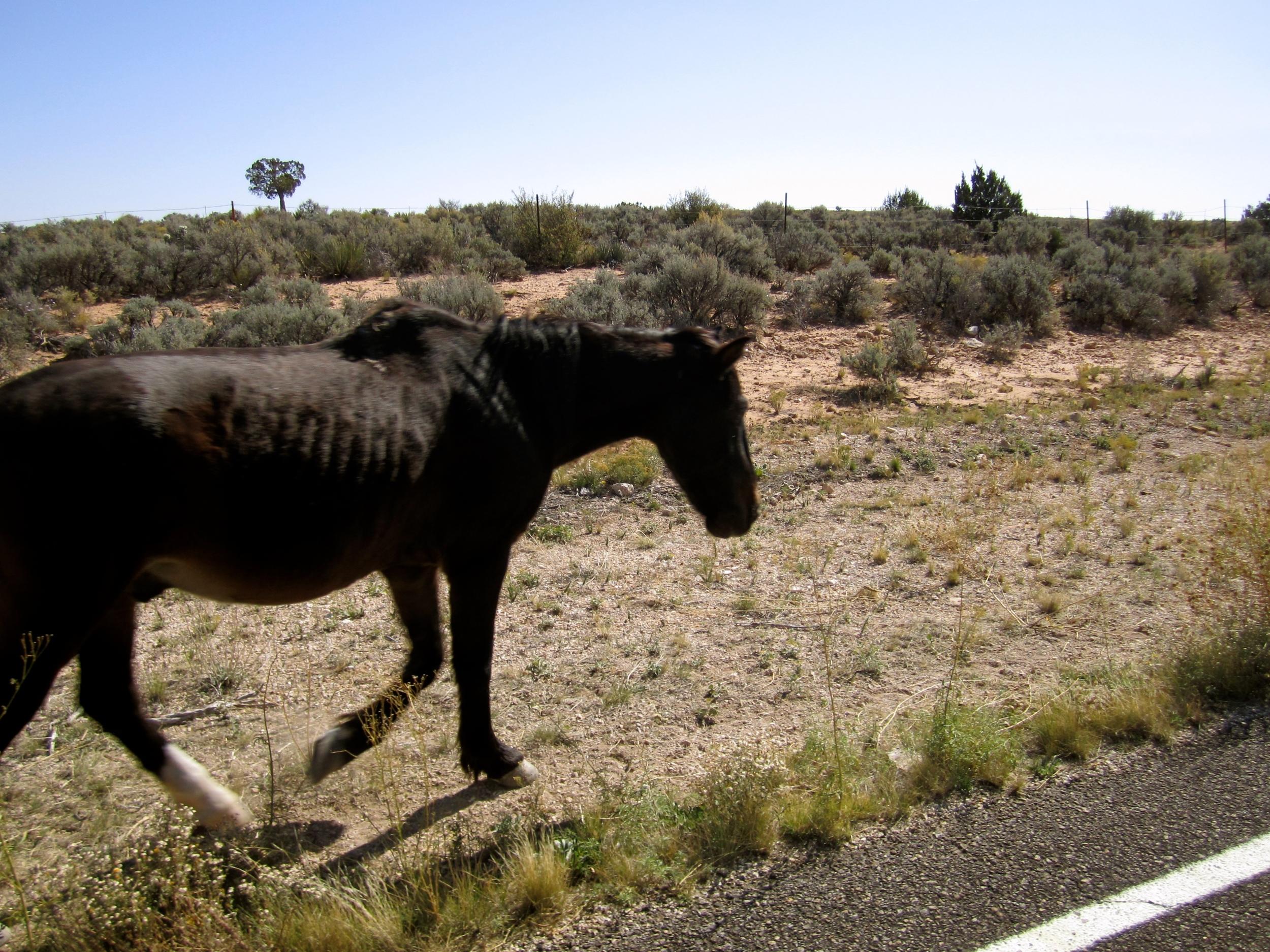 Havasupai Horse