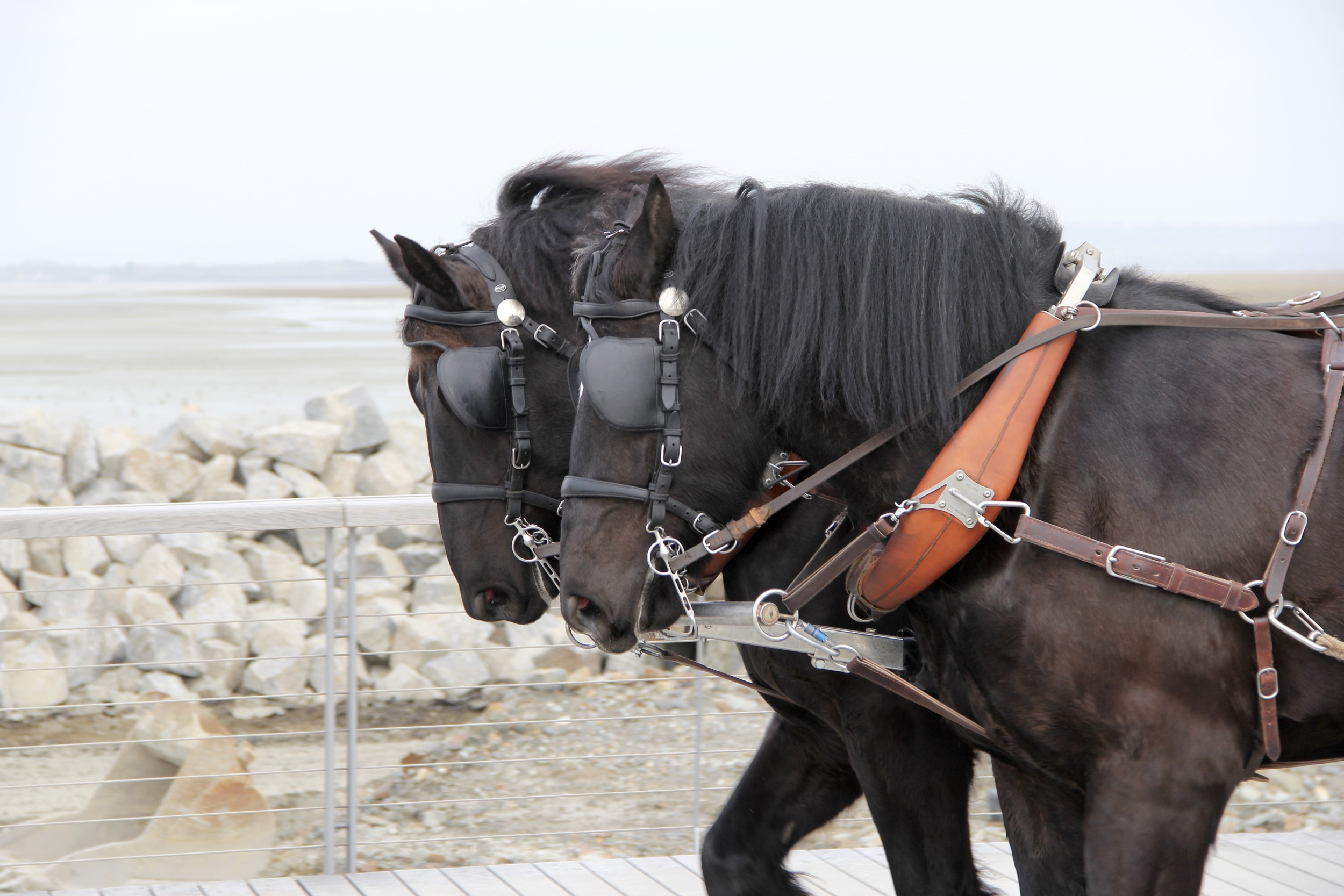 Horse Carriage at Mont St Michel