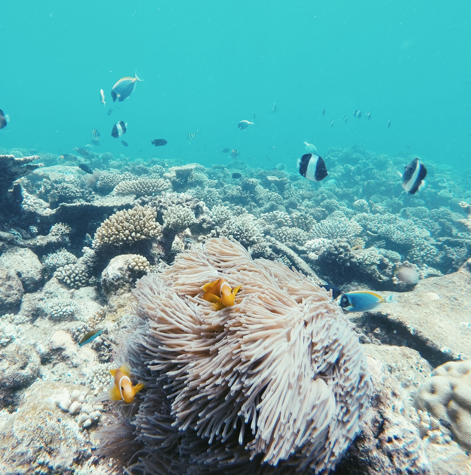 Sunscreen & Coral Reefs: How to Enjoy the Reefs without Destroying Them