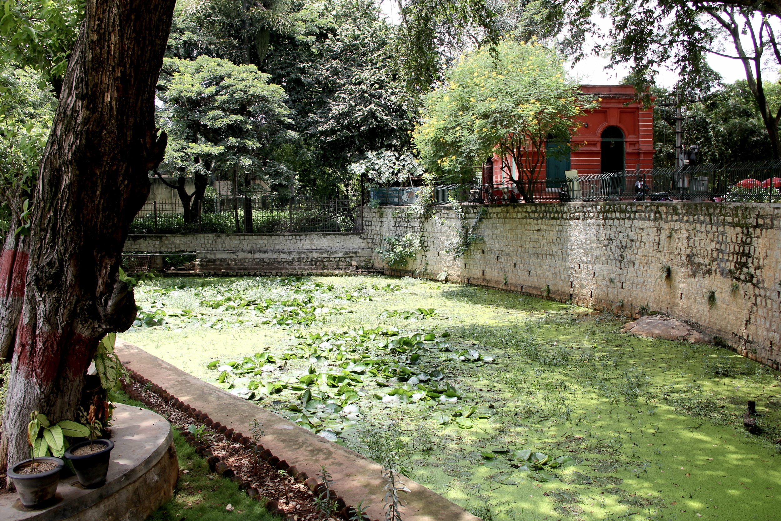 lily pond in bangalore, india | beyond ordinary guides