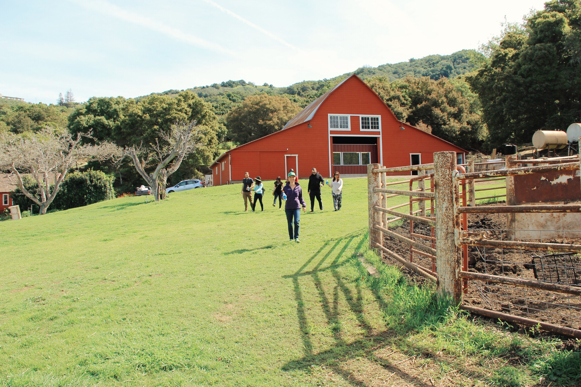 Time to bottle feed the kids at Stepladder Creamery in Cambria, CA
