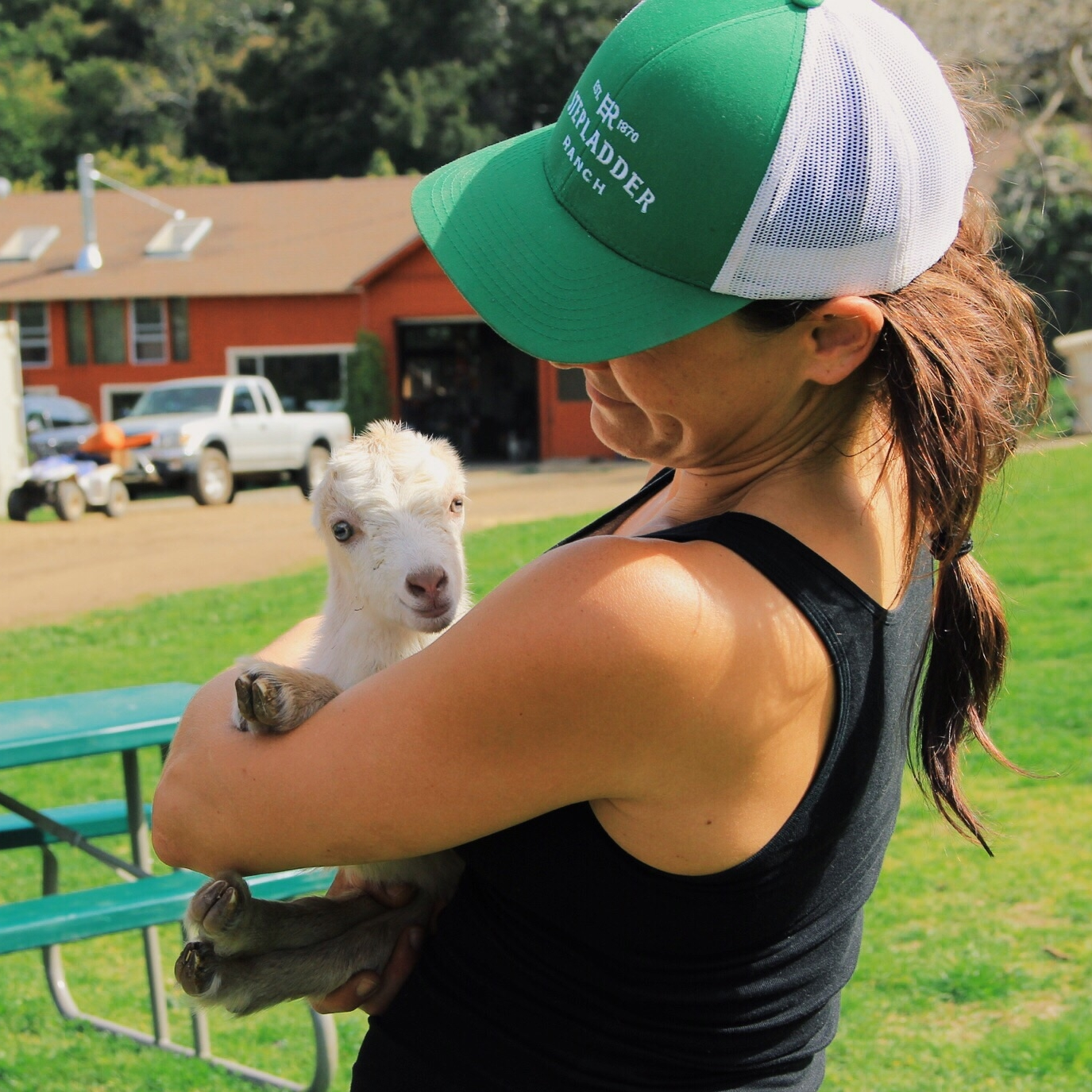 Two day old kid getting all sorts of lovey at Stepladder Creamery in Cambria, CA