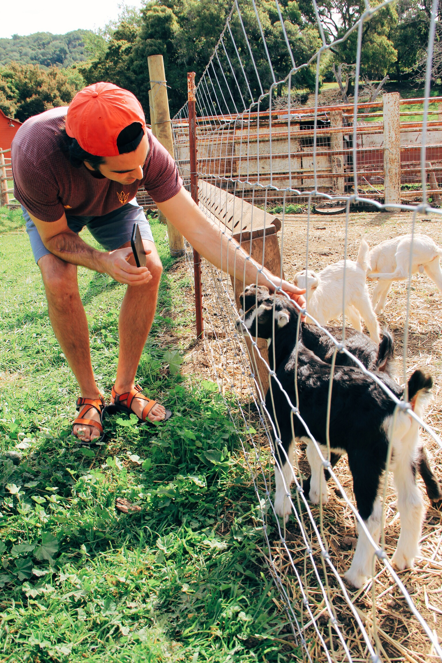 """Spring Activity Idea: Visit a Goat Farm! The """"kids"""" are such a treat for adults and kids alike!"""