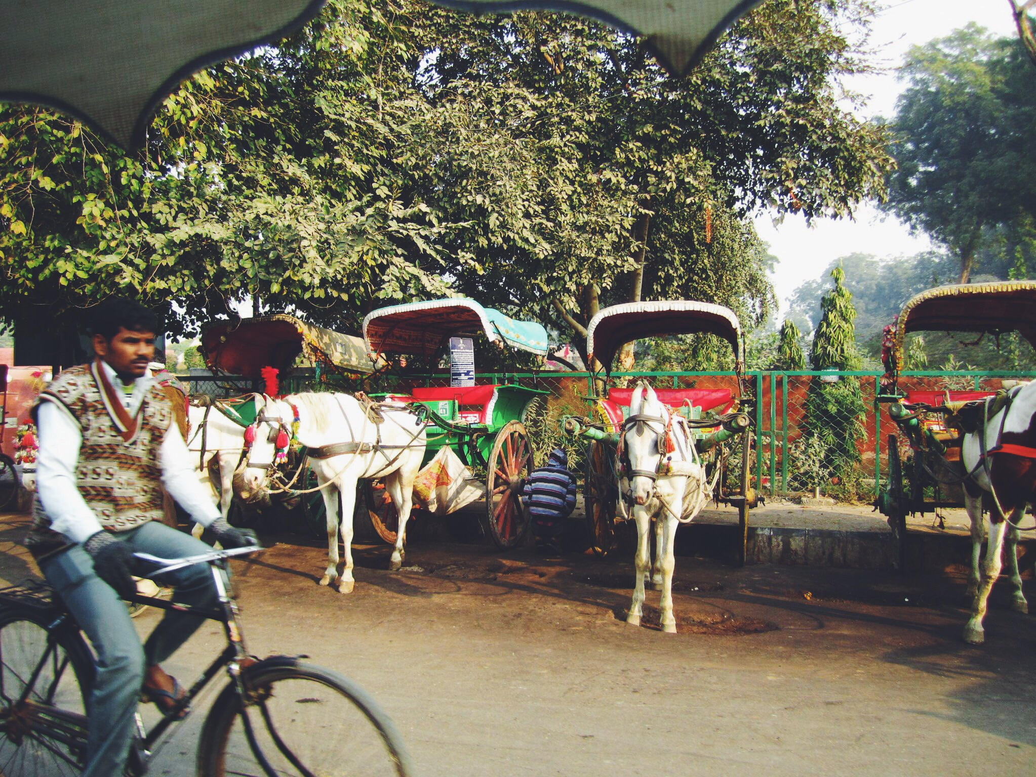 Passing the ornately decorated horse carriages on our way to the Taj Mahal entrance