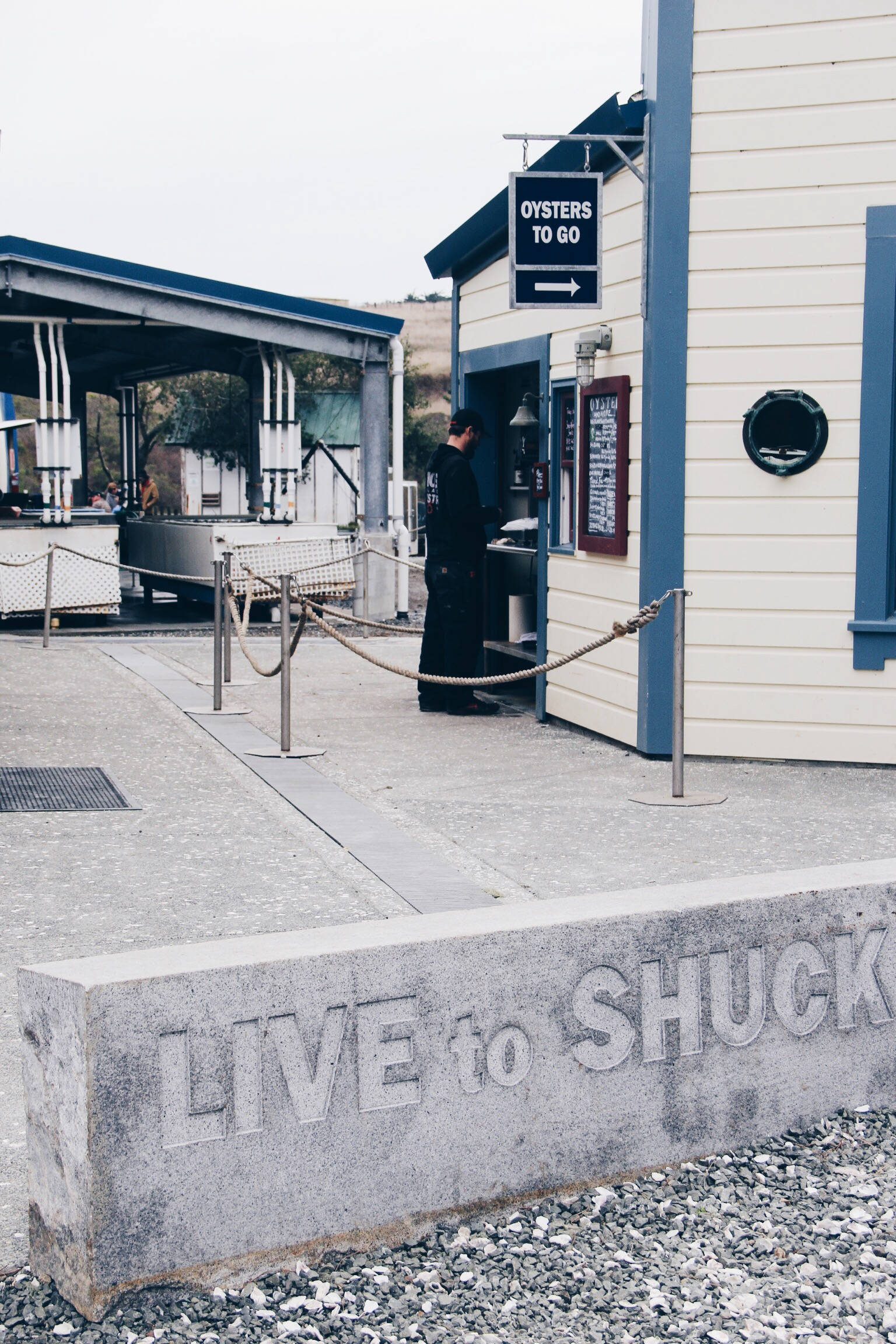 Hog Island Oyster Co | Live to Shuck