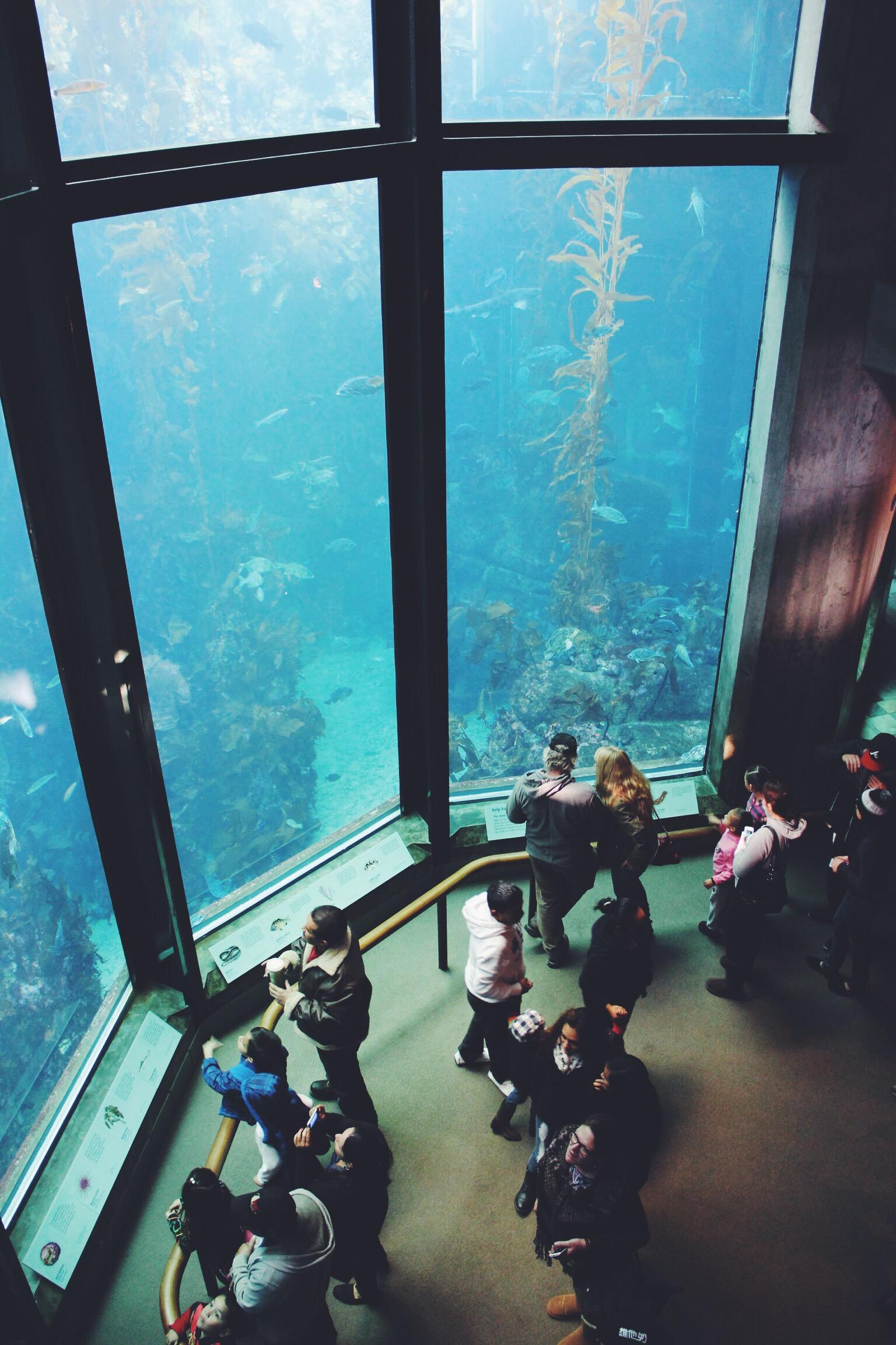 Visitors admire the Kelp Forest exhibit at the Monterey Bay Aquarium