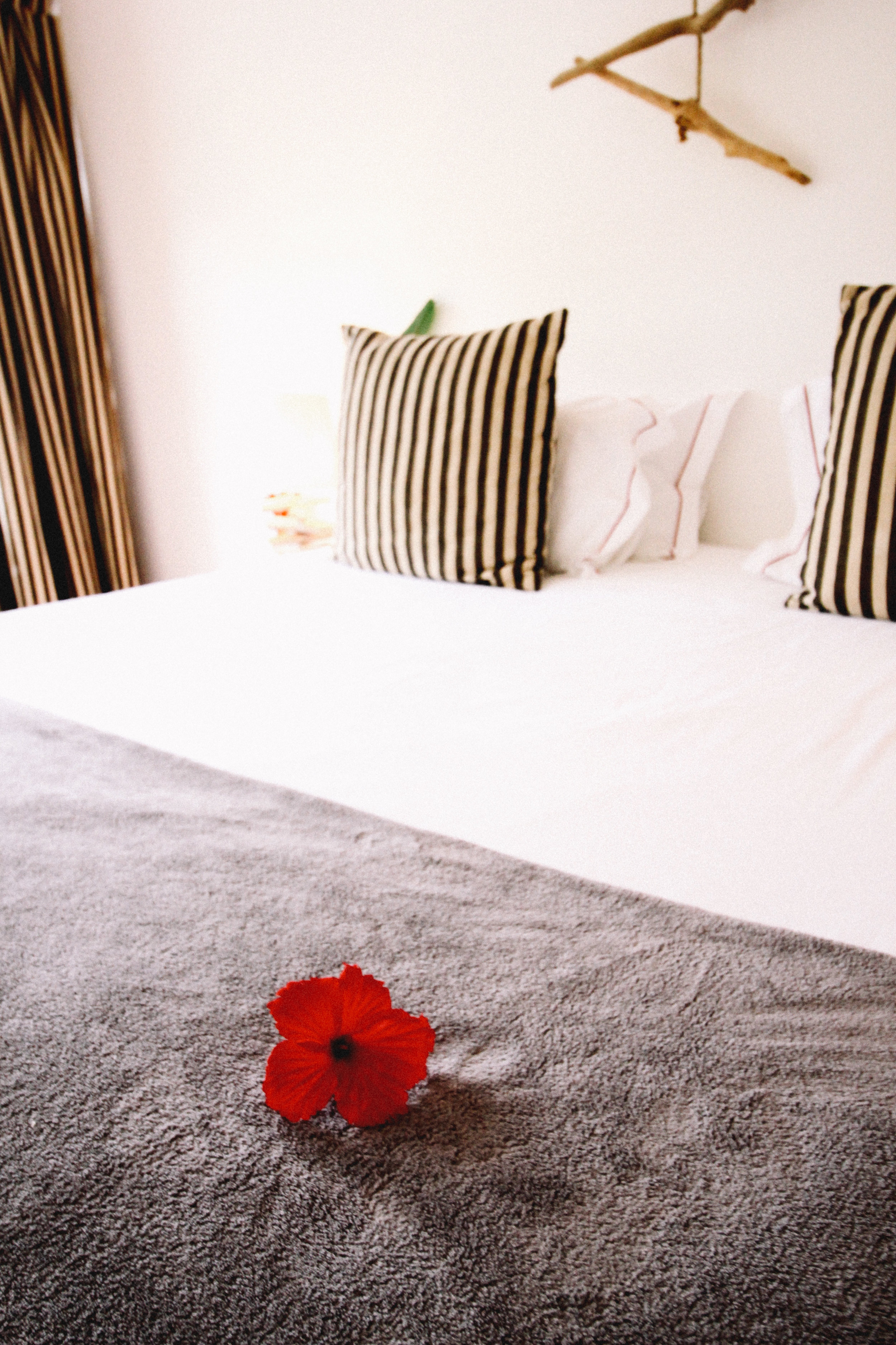 A fresh hibiscus adorns the bed in the Fregate Suite at Copolia Lodge, Mahe, Seychelles