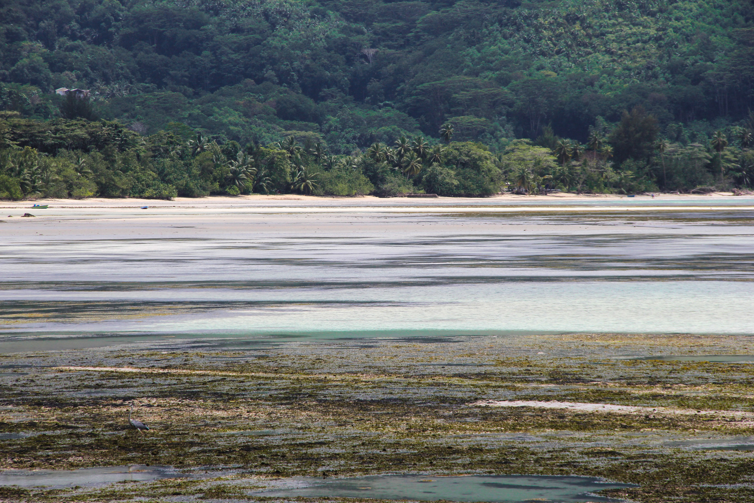 Low tide on Mahe Island, Seychelles