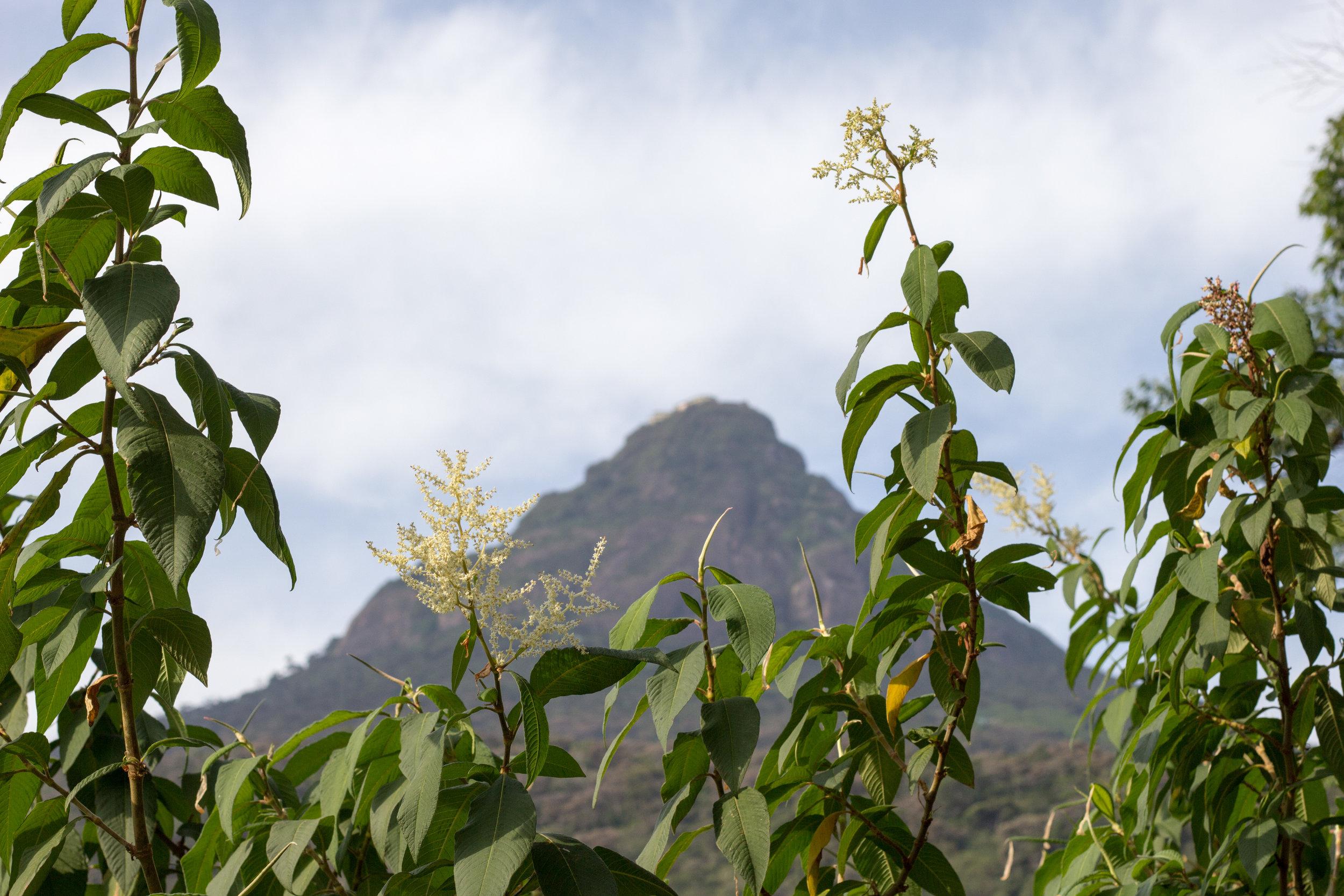 Sri Lanka Adam's Peak-25.jpg
