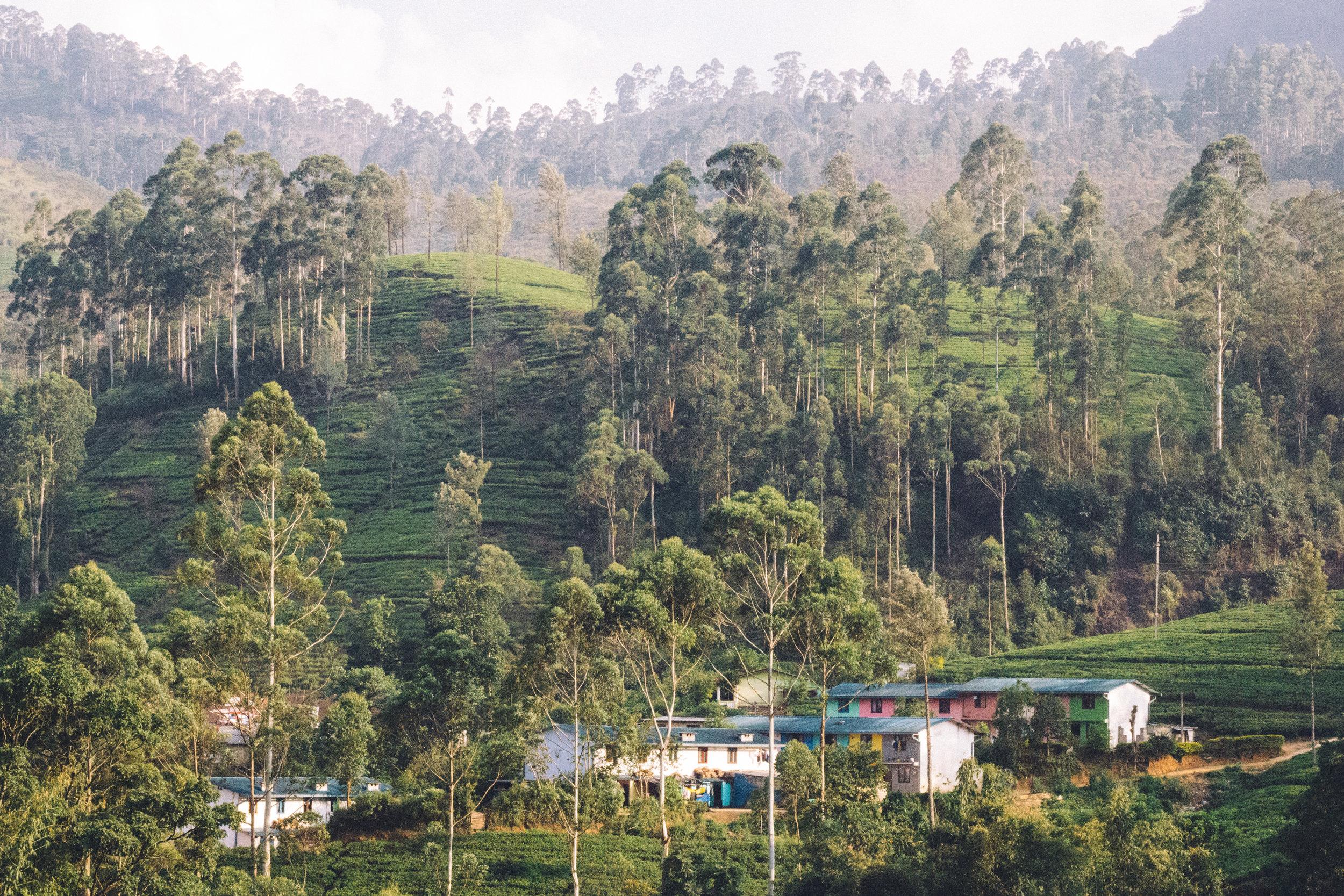 Sri Lanka Adam's Peak-32.jpg