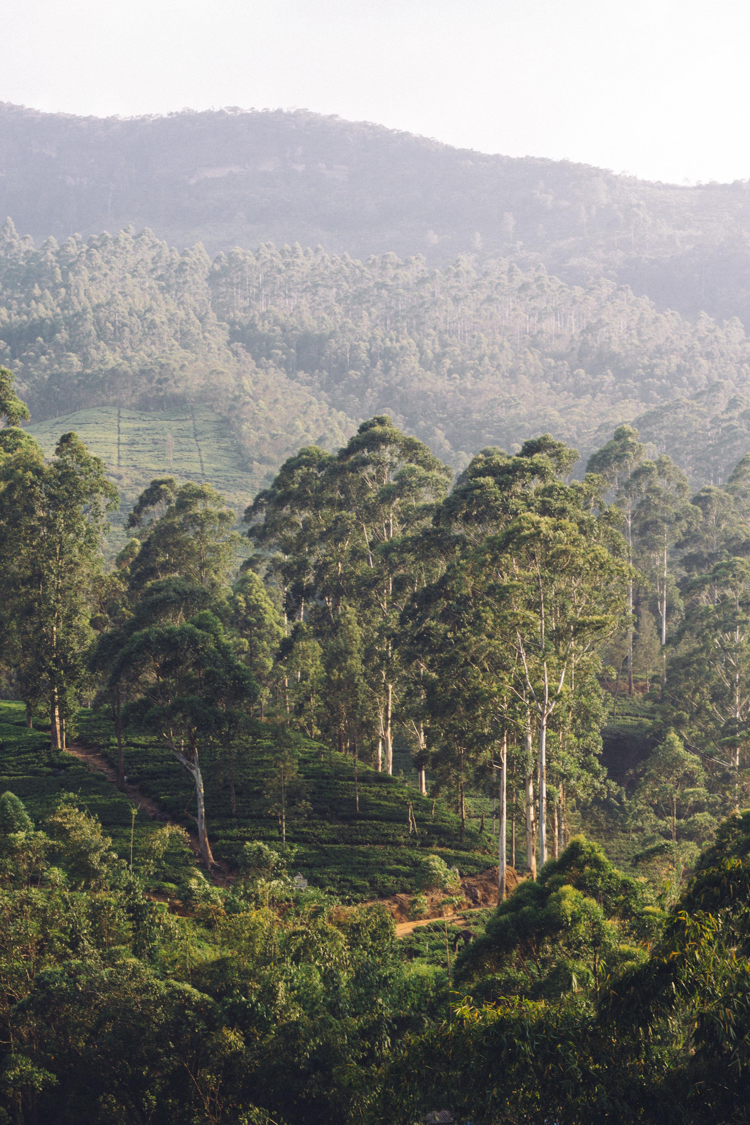 Sri Lanka Adam's Peak-33.jpg