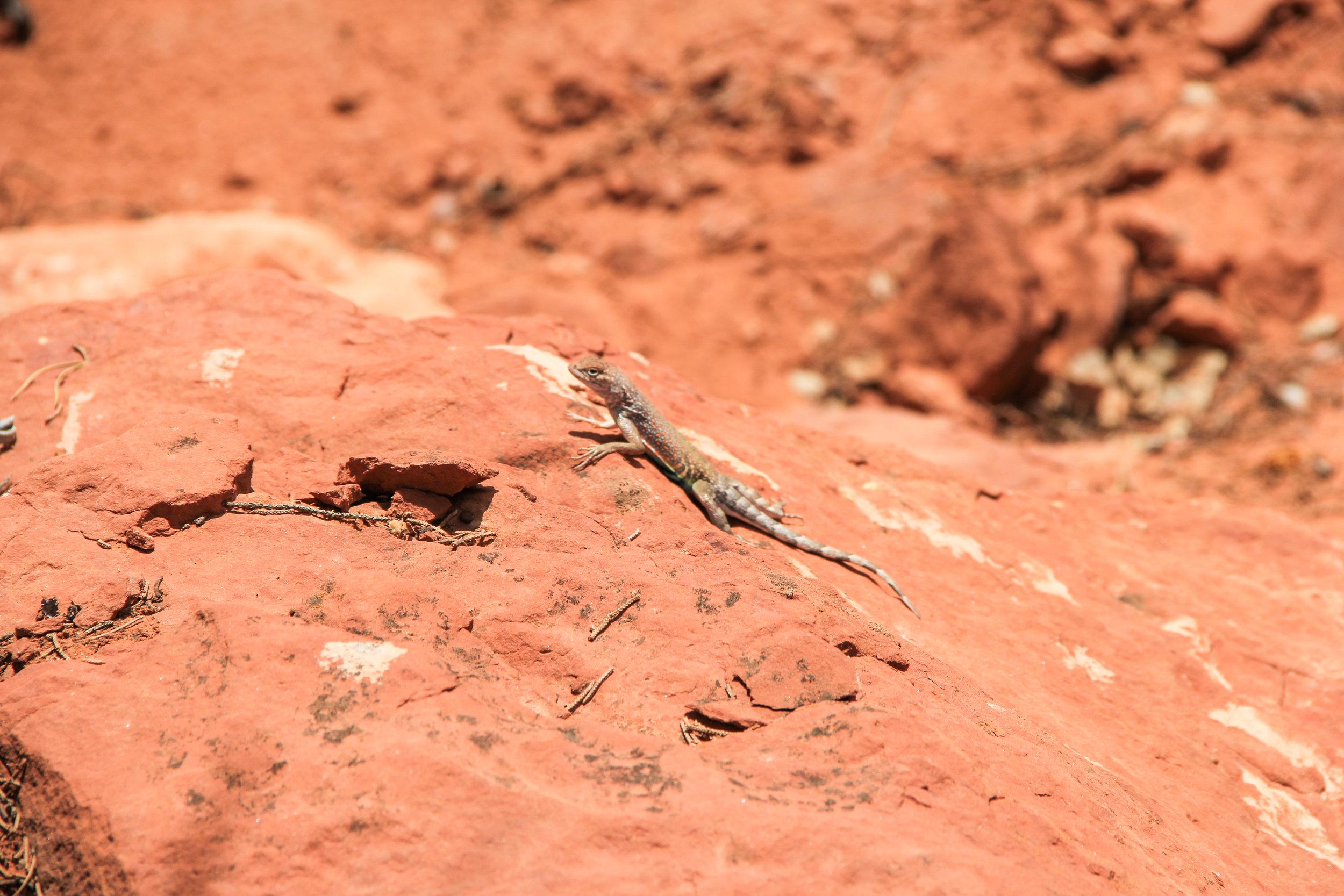 Beyond Ordinary Guides' Guide to Sedona, Arizona-58.jpg