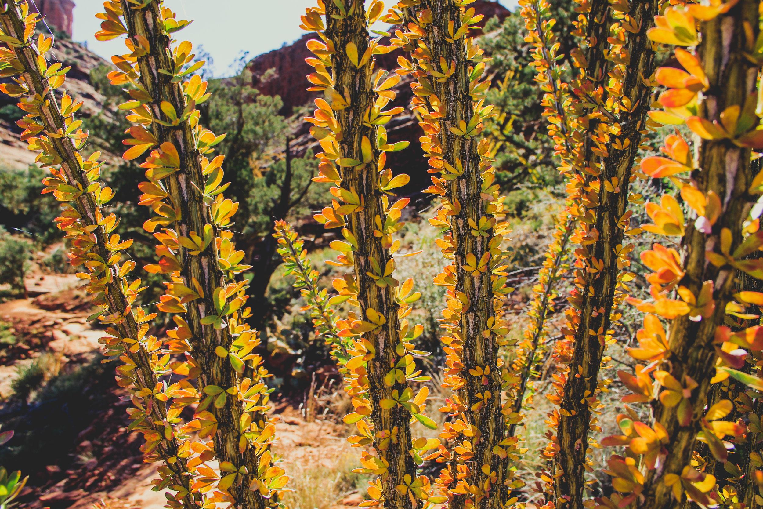Beyond Ordinary Guides' Guide to Sedona, Arizona-63.jpg