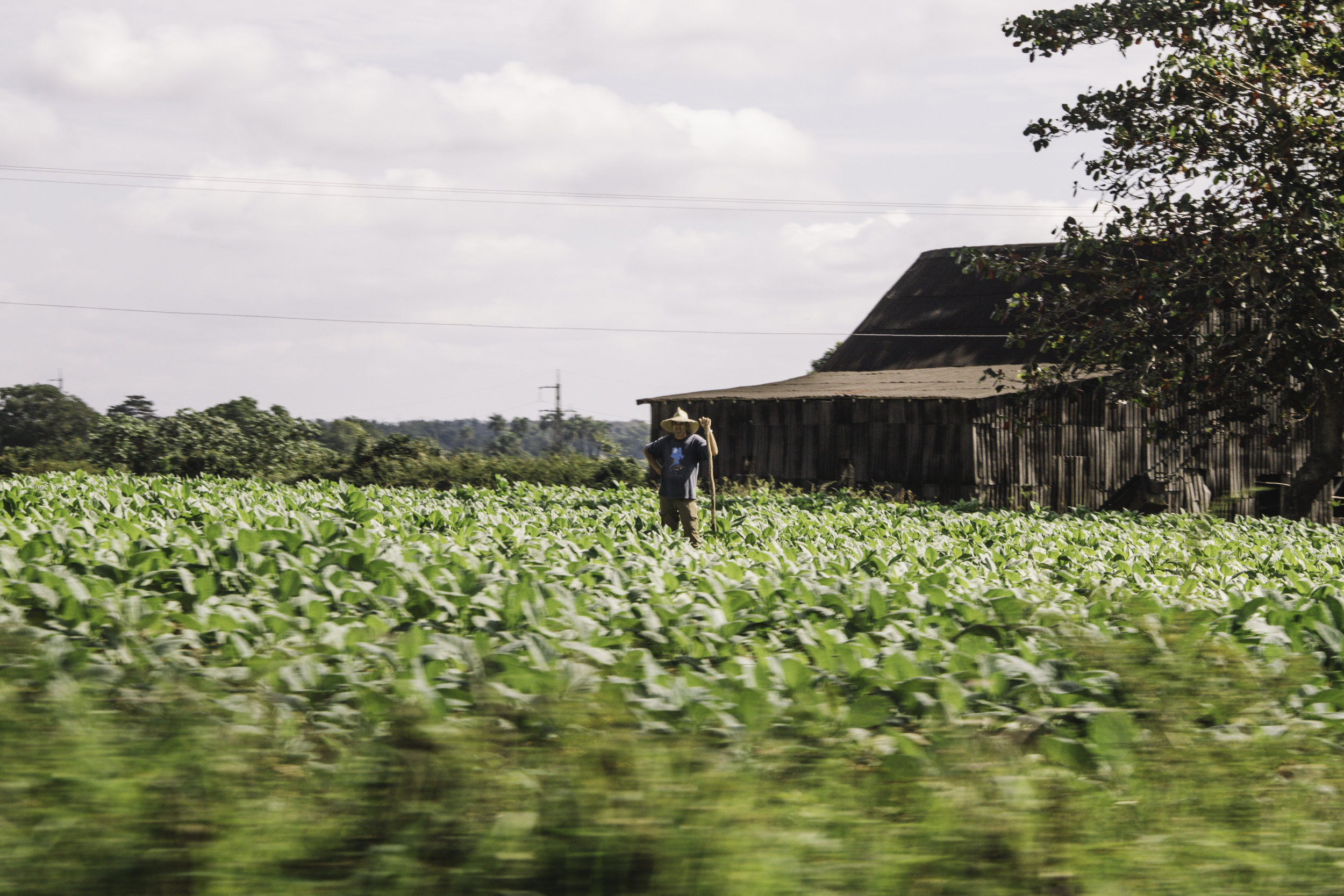 Our Favorite Day in Cuba | Horseback Riding in Vinales, Cuba | Beyond Ordinary Guides-2.jpg