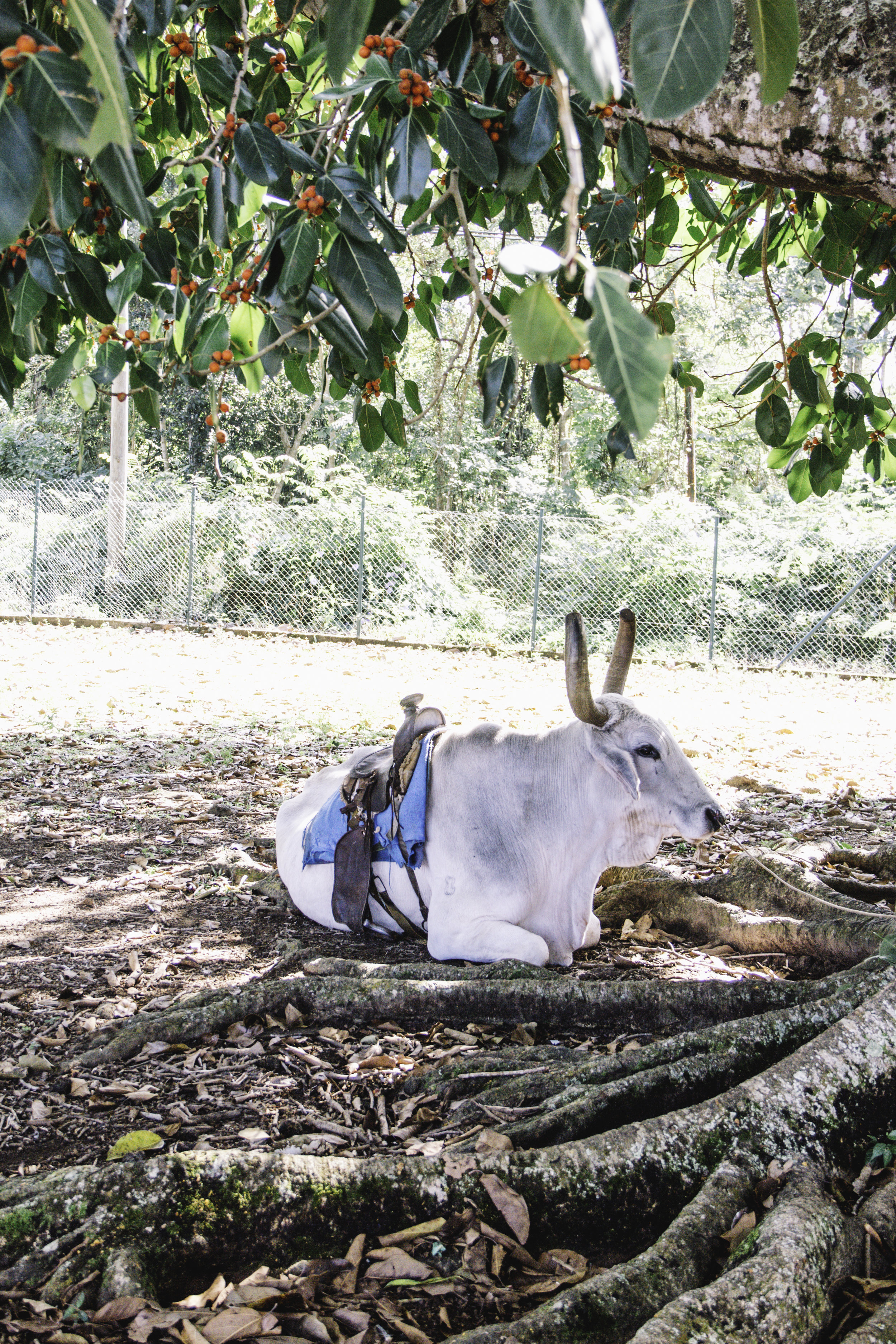 Our Favorite Day in Cuba | Horseback Riding in Vinales, Cuba | Beyond Ordinary Guides-10.jpg