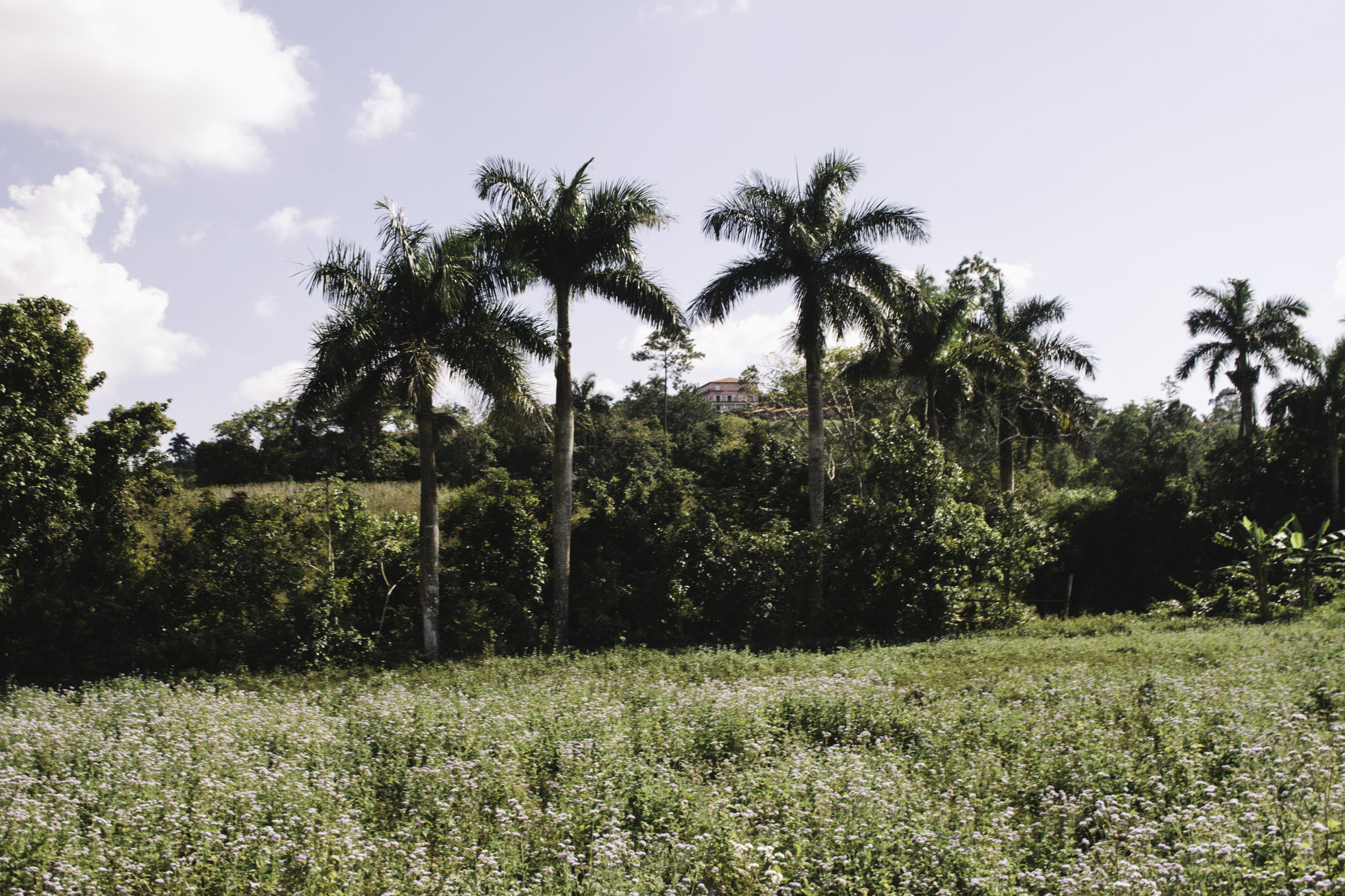Our Favorite Day in Cuba | Horseback Riding in Vinales, Cuba | Beyond Ordinary Guides-32.jpg