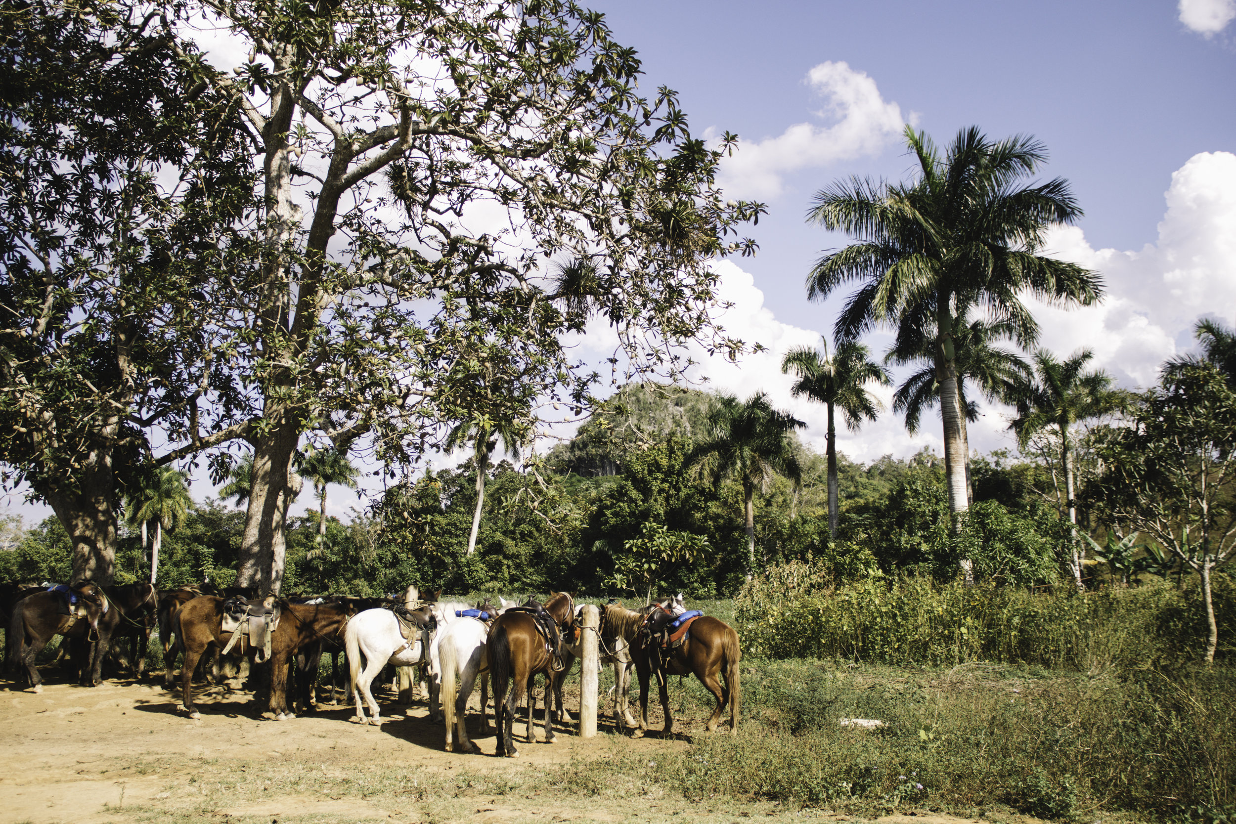 Our Favorite Day in Cuba | Horseback Riding in Vinales, Cuba | Beyond Ordinary Guides-50.jpg