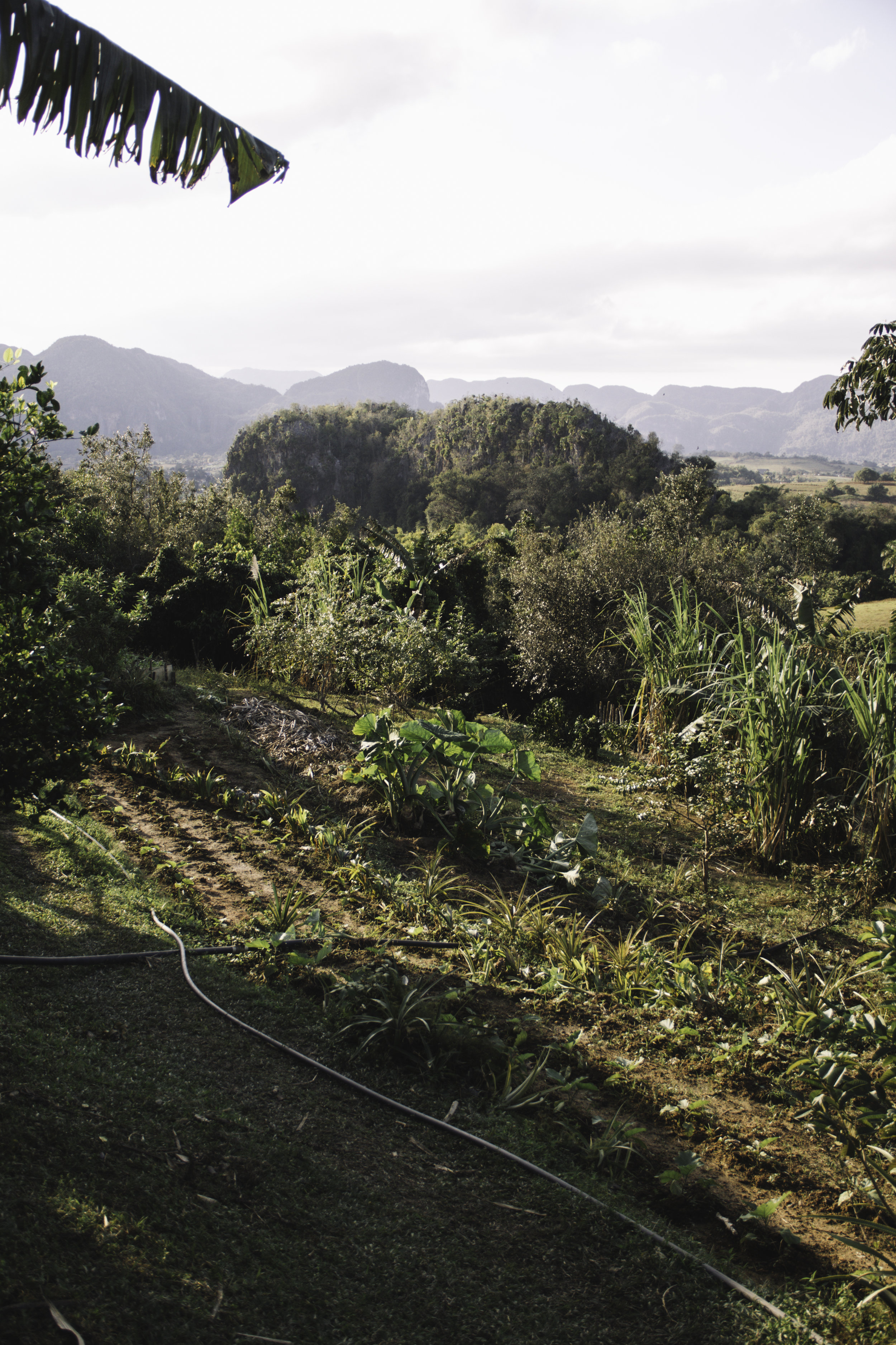 Our Favorite Day in Cuba | Horseback Riding in Vinales, Cuba | Beyond Ordinary Guides-73.jpg