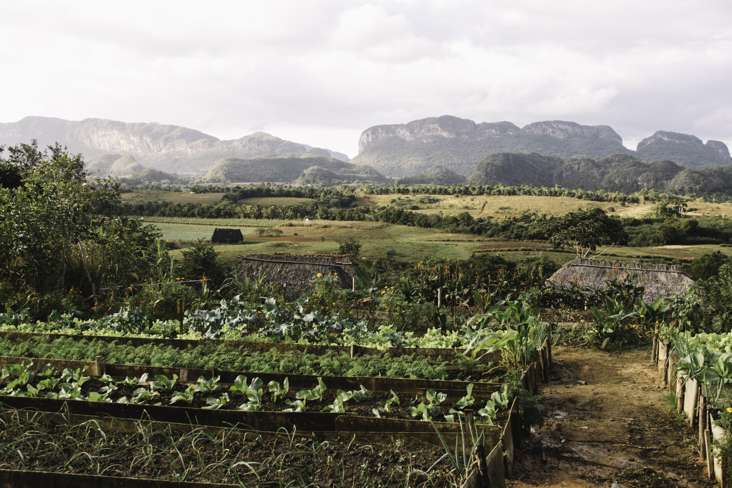 Our Favorite Day in Cuba | Horseback Riding in Vinales, Cuba | Beyond Ordinary Guides-80.jpg