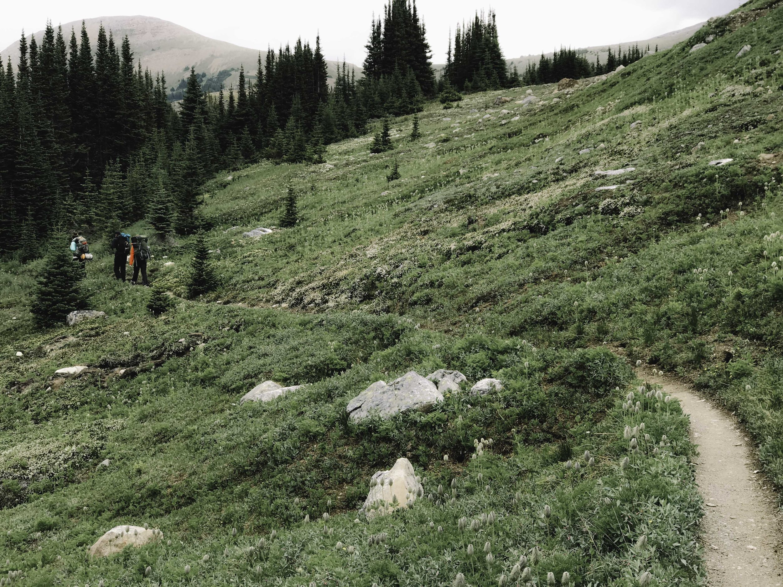 Hiking the Skyline Trail | Beyond Ordinary Guides-58.jpg