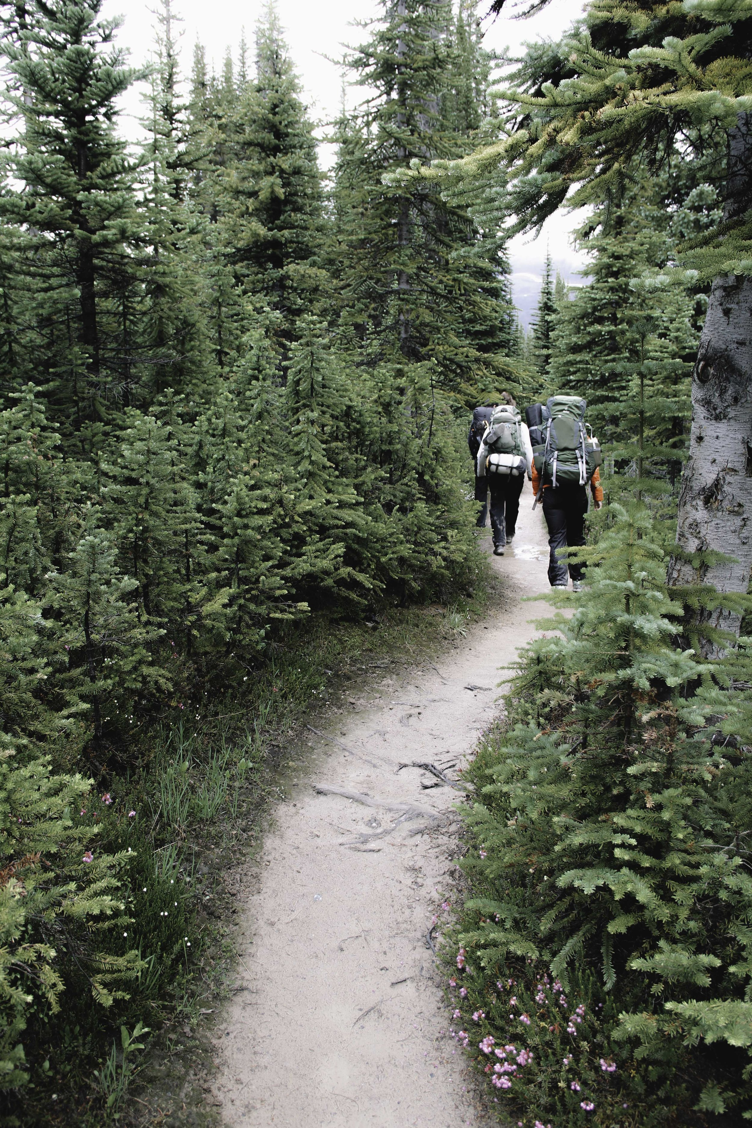 Hiking the Skyline Trail | Beyond Ordinary Guides-59.jpg