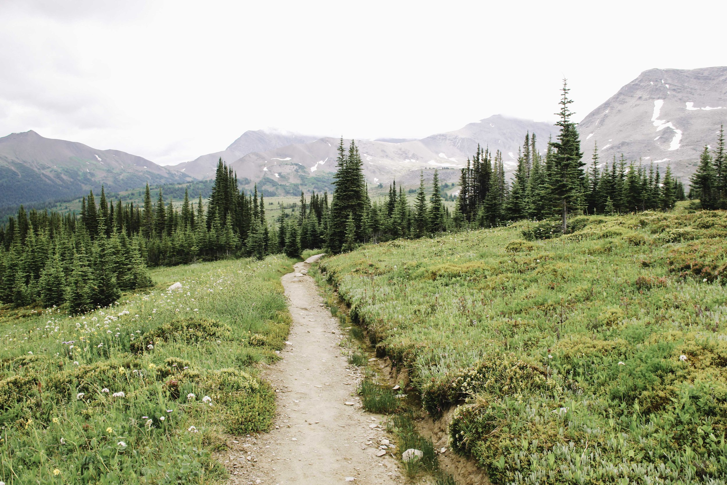 Hiking the Skyline Trail | Beyond Ordinary Guides-83.jpg